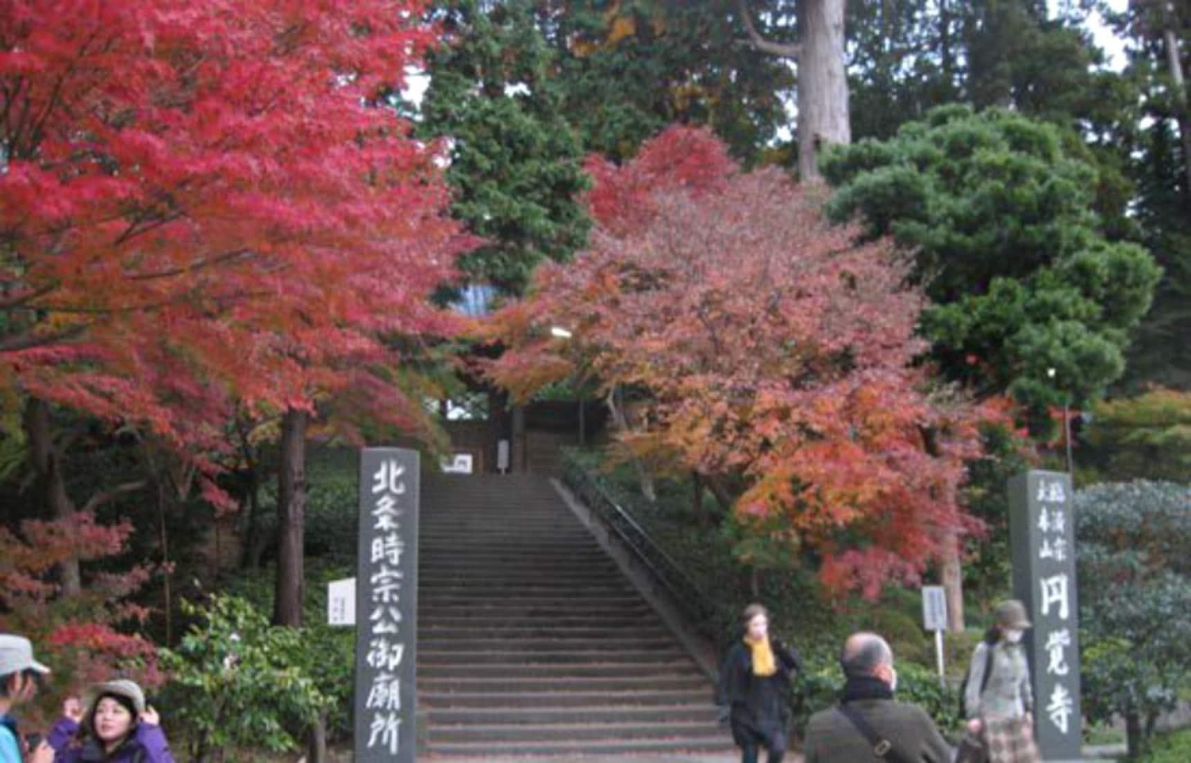 Kamakura Autumn Colors Report