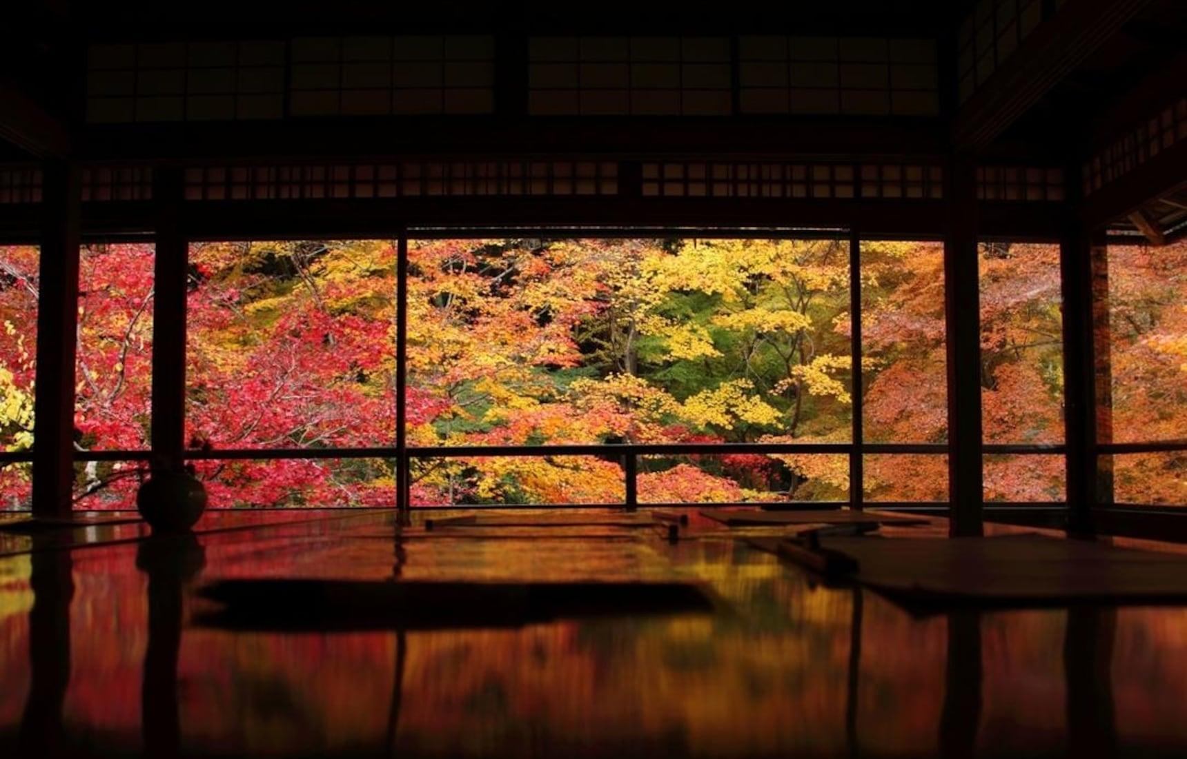 10 สไตล์การชมใบไม้เปลี่ยนสีใน Kyoto