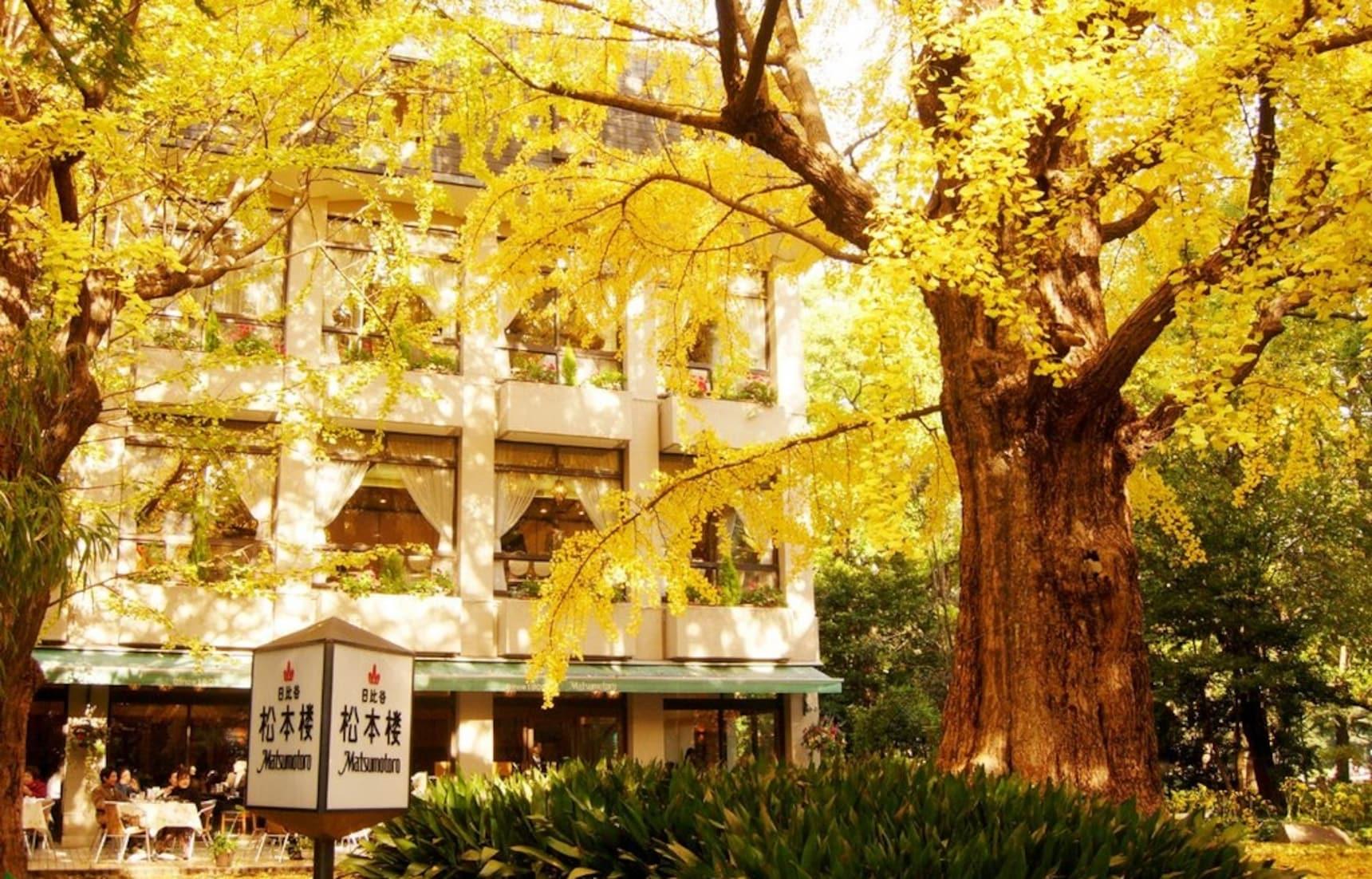 ชวนไปนั่งชิล ชมใบไม้เปลี่ยนสีที่ 5 คาเฟ่ Tokyo