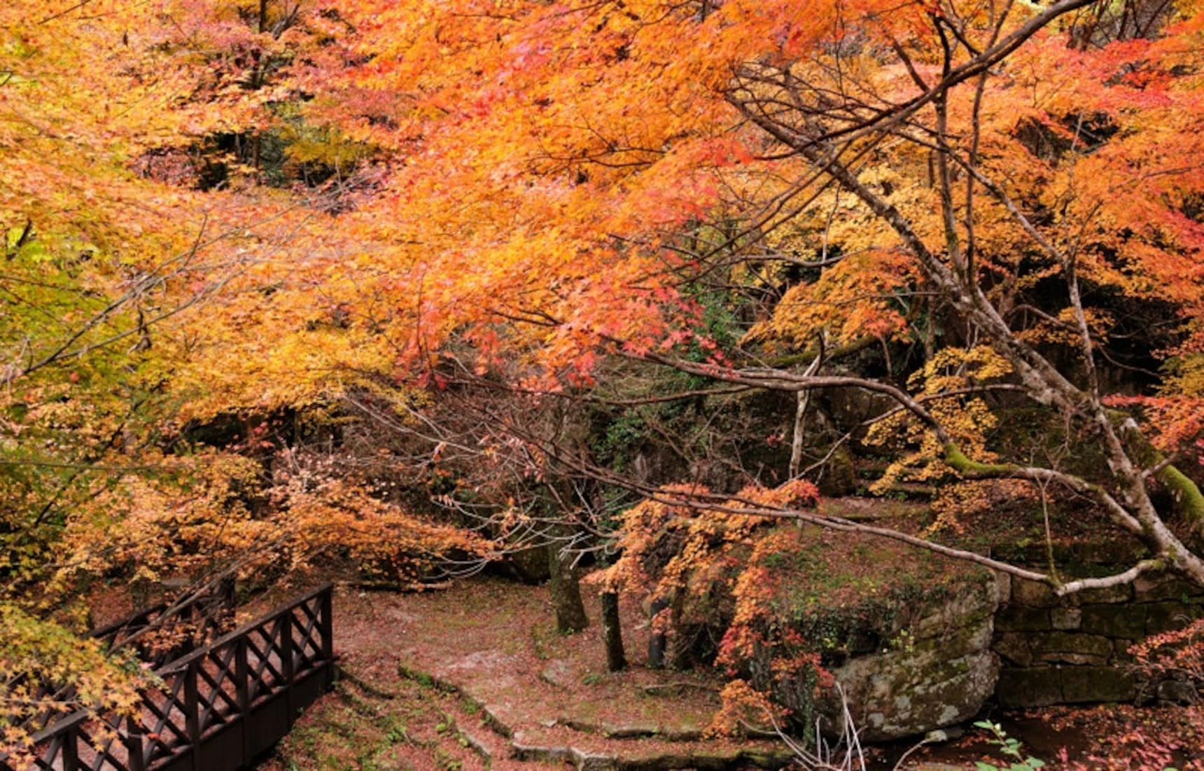 Fukuoka's 4 Best Fall Color Spots