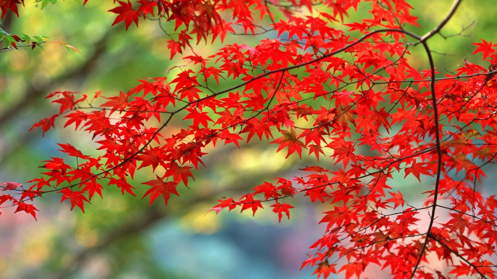 도쿄 지역: 가을 단풍 명소 3選