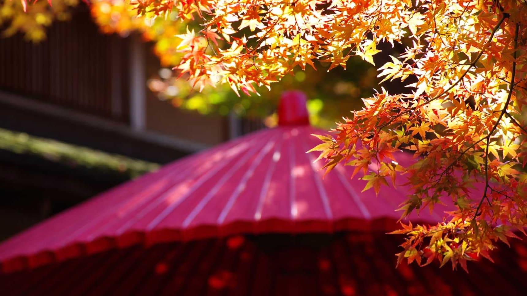 하코네: 가을 단풍 명소 5選