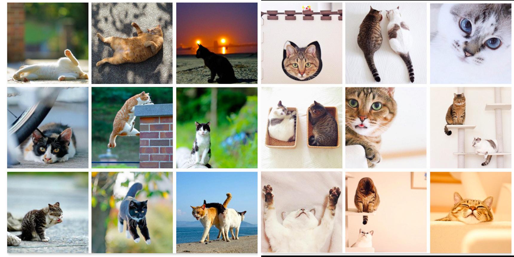 8 instagram แมวที่ขอให้ไป follow เดี๋ยวนี้เลย