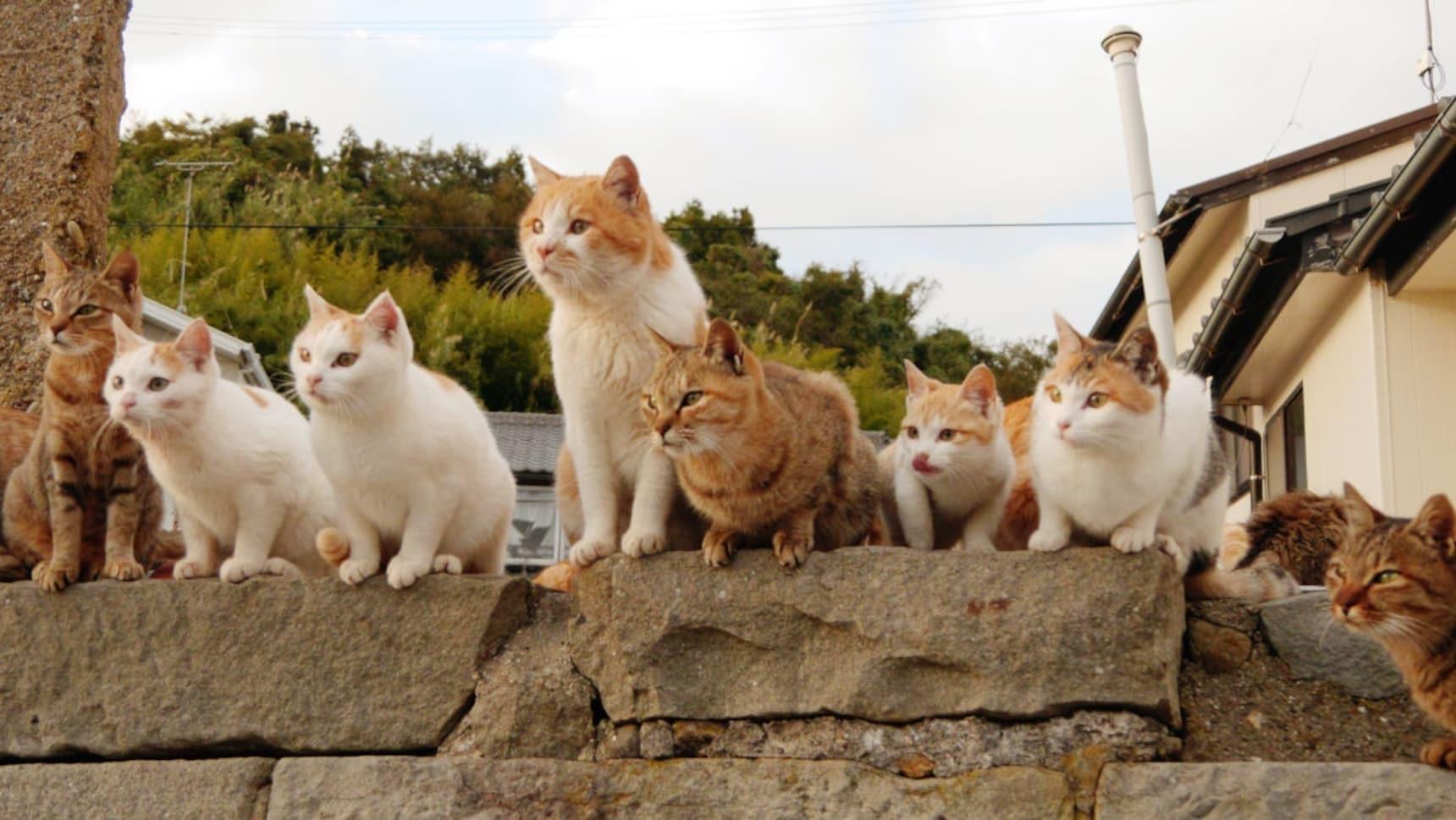 เรียนภาษาญี่ปุ่นกับ 7 คำศัพท์แมวๆ
