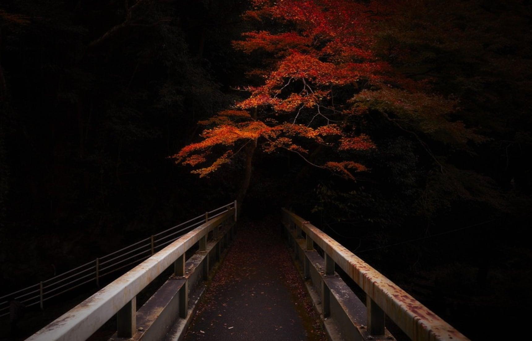 暗物质 - 和摄影师小川康博一起迷失京都