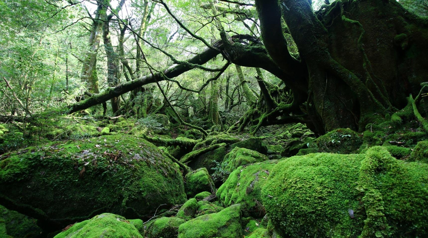 日本自由行之探訪那些神秘的世界遺產② — 千年祕境屋久島