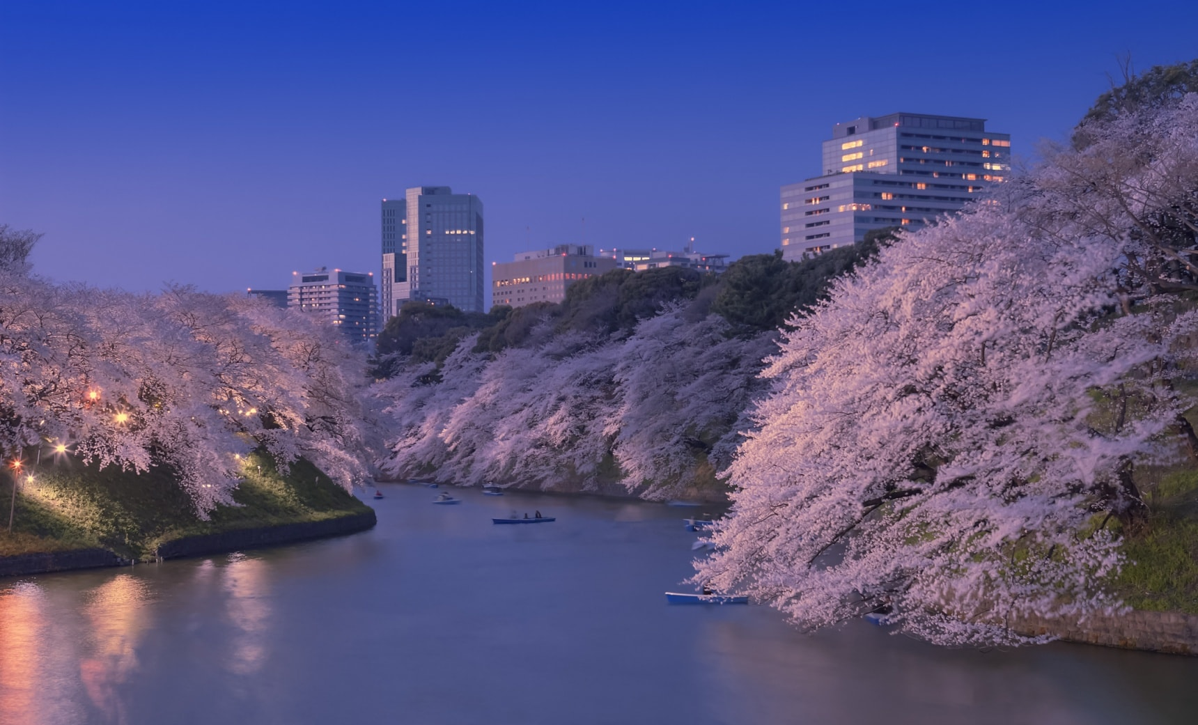 10 Top Nighttime Cherry Blossom Viewing Spots
