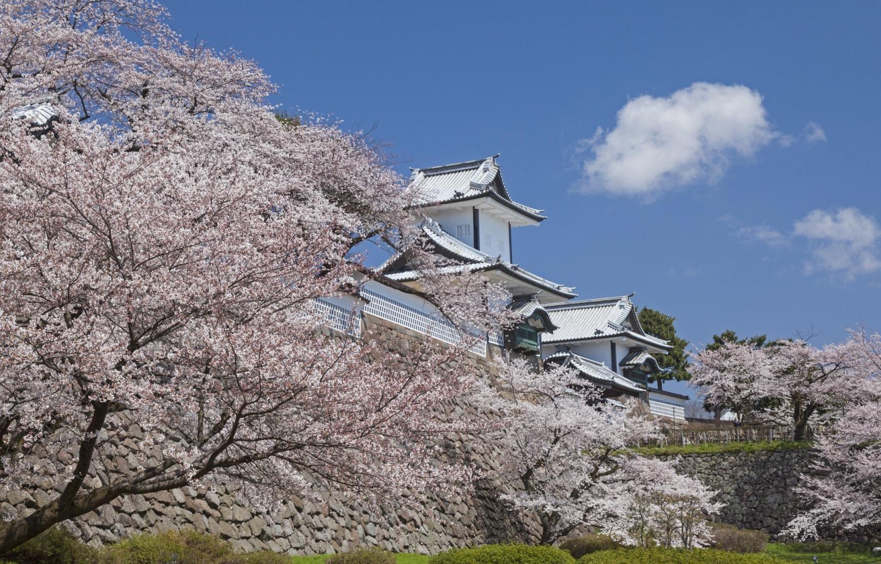 사쿠라 in 카나자와: 벚꽃 아래의 일본 전통의 미