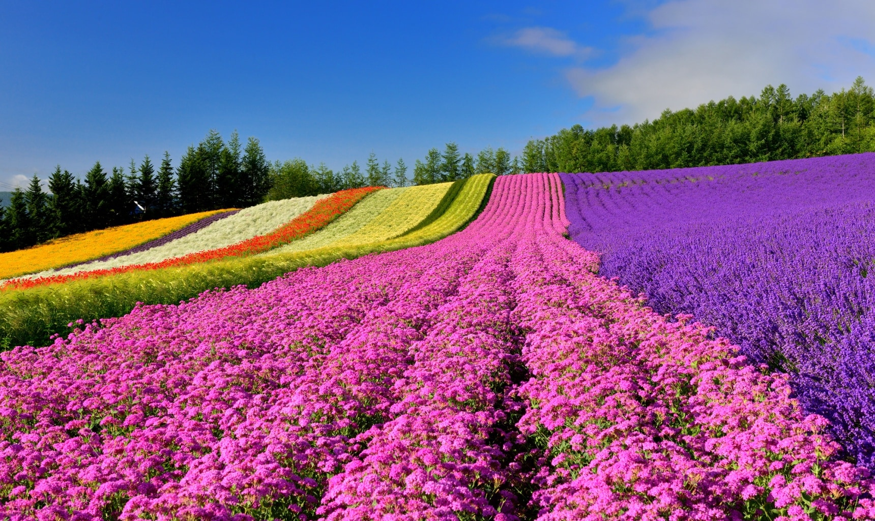 Modern Style Beds 8 Must See Flower Spots In Hokkaido All About Japan