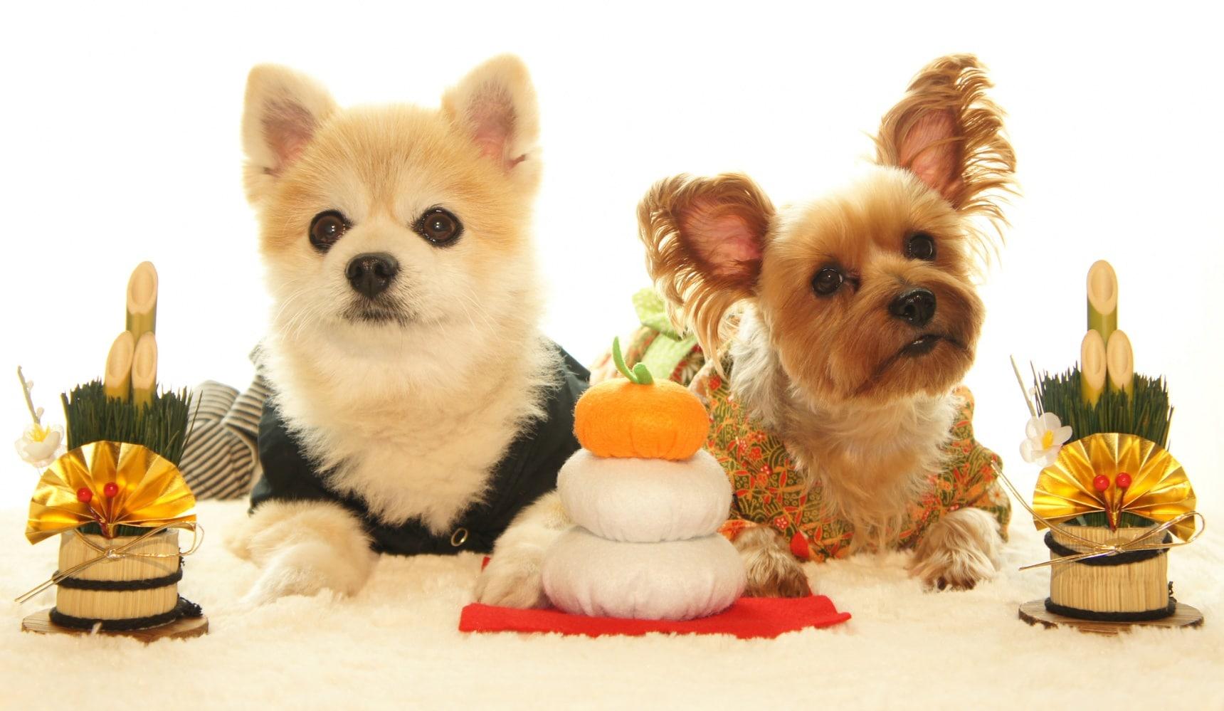 8 วิธีฉลองเทศกาลกับสัตว์เลี้ยง (แบบคนญี่ปุ่น)