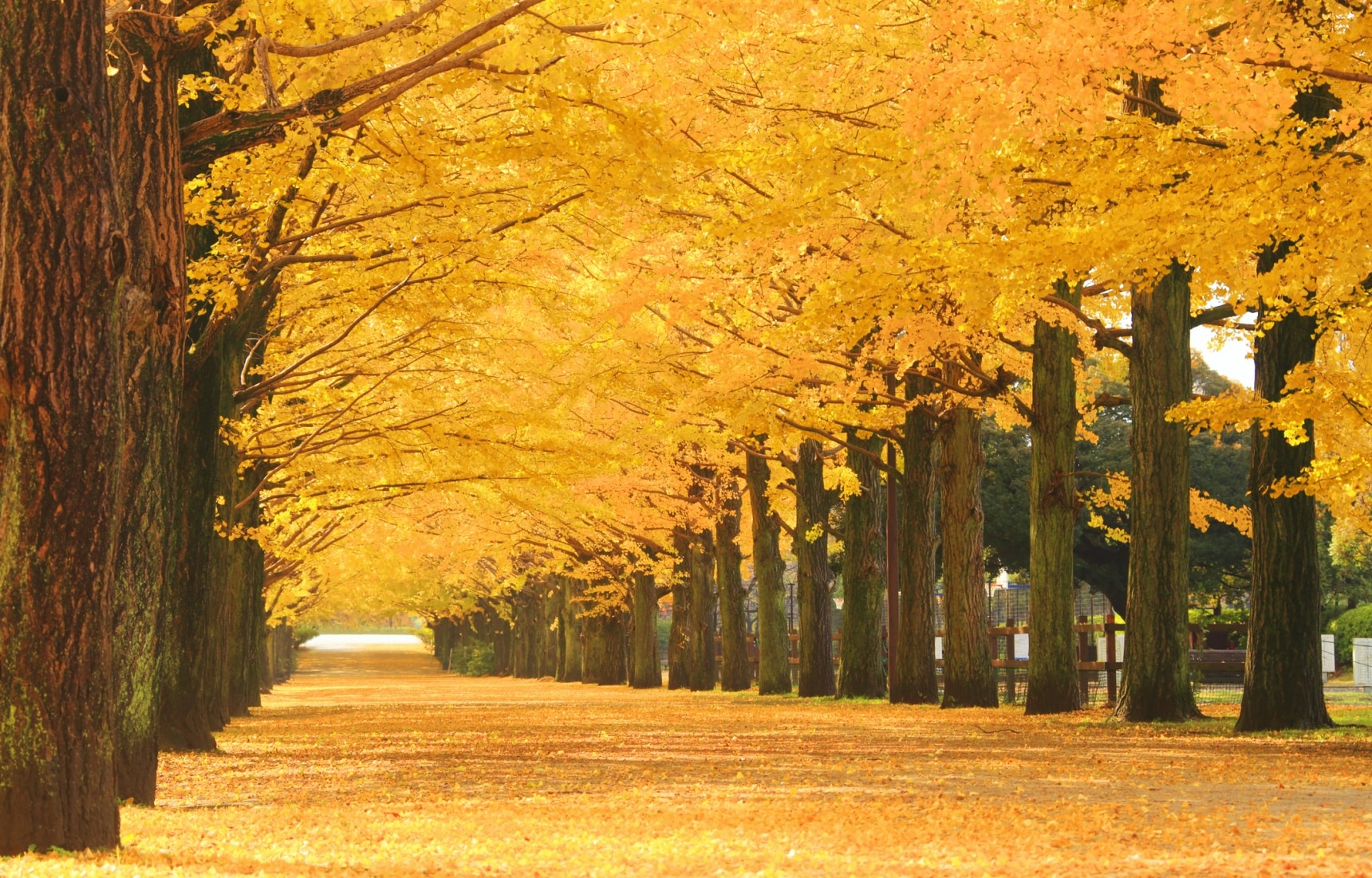 Outer Tokyo's 5 Best Fall Foliage Spots