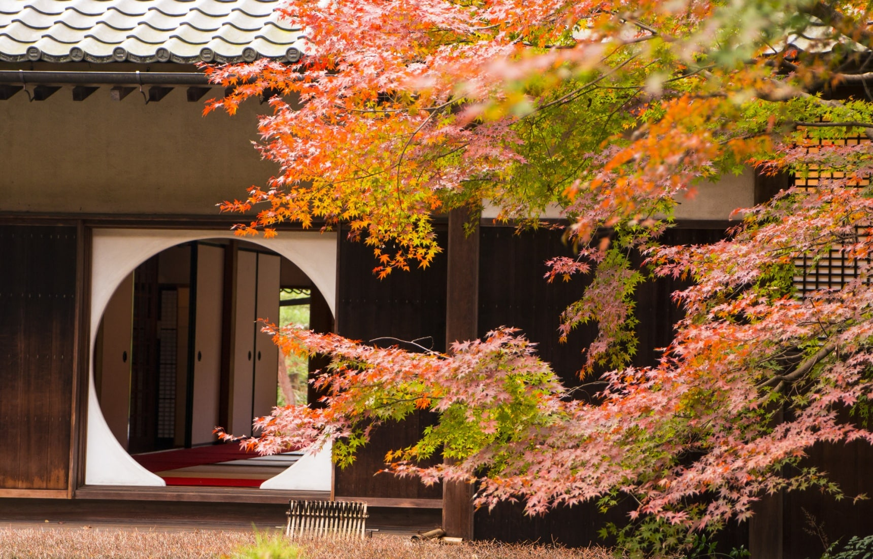 Kamakura's Top 10 Fall Foliage Spots
