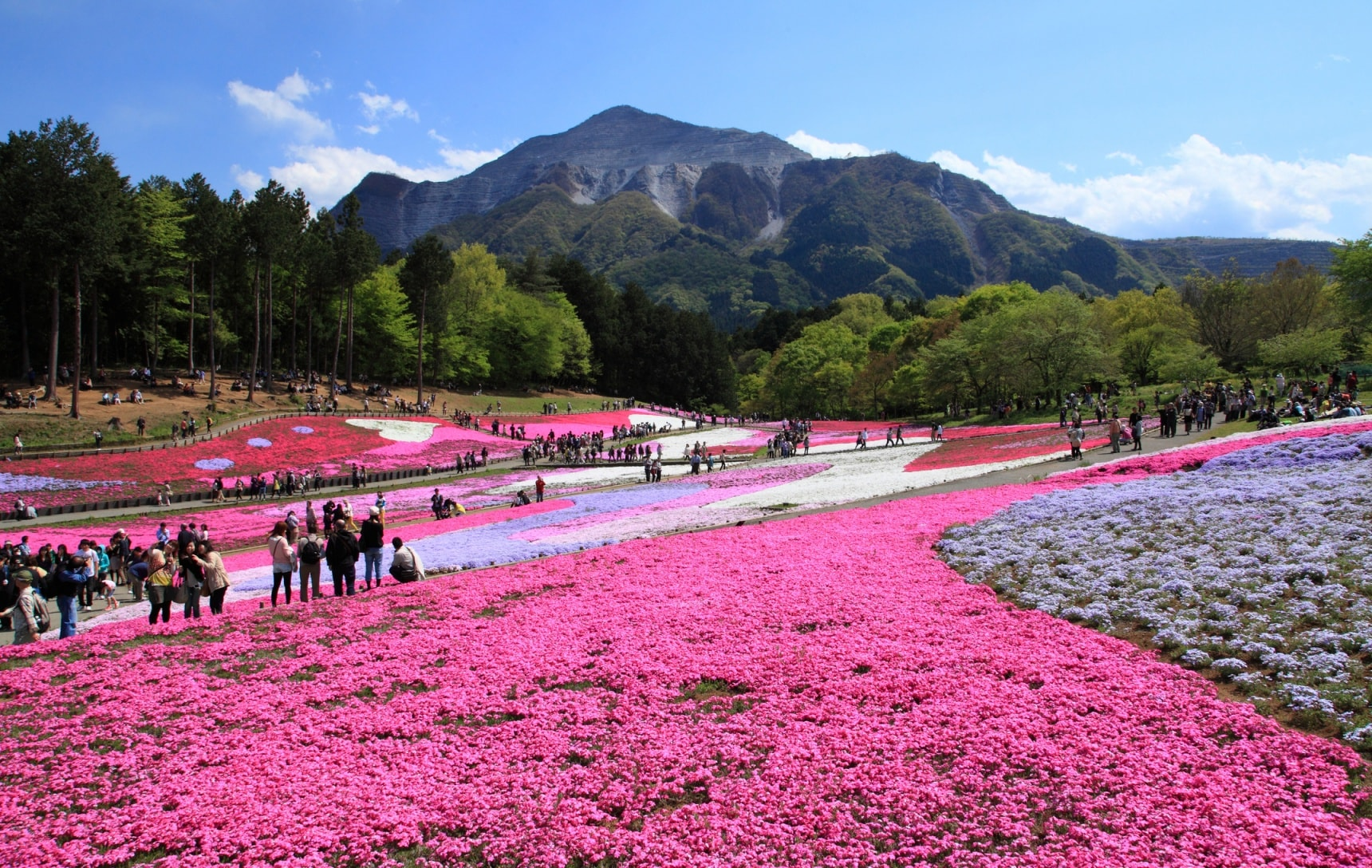 top 6 flower spots in saitama | all about japan