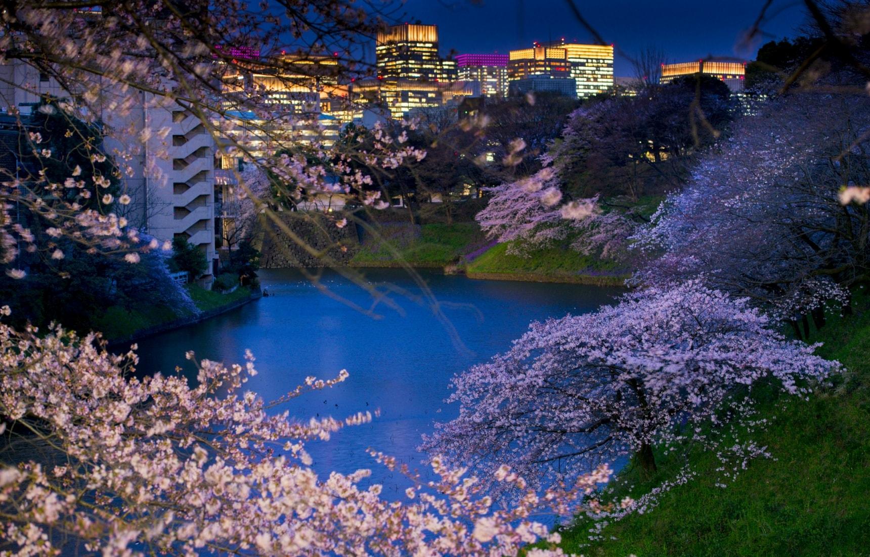 5 จุดชมซากุระยามค่ำคืนของโตเกียว