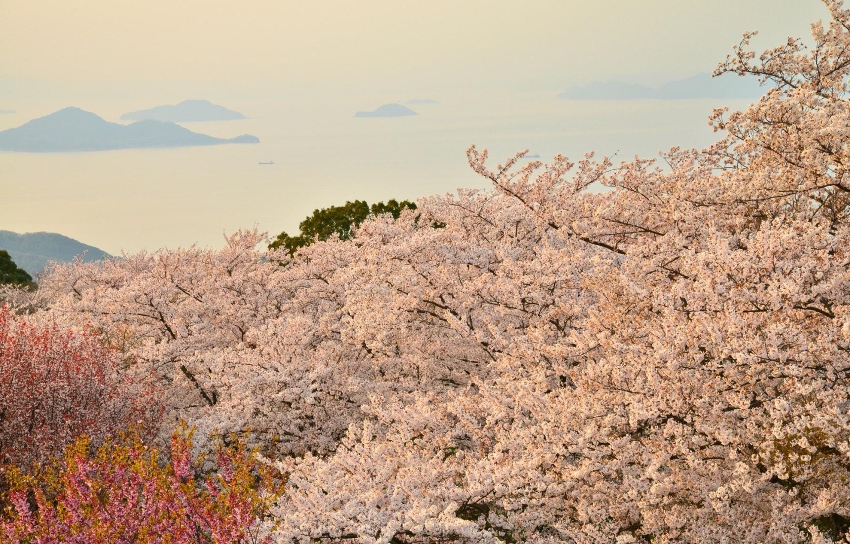 Top 6 'Hanami' Spots in Shikoku