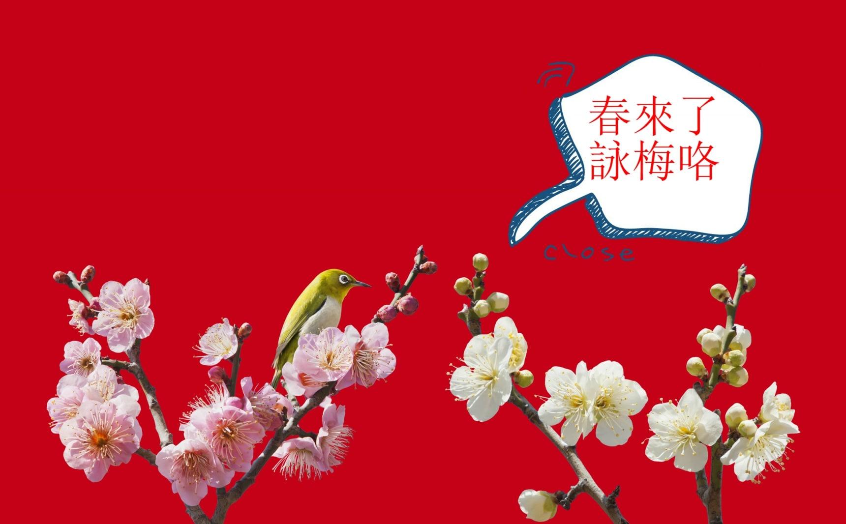 【神奈川自由行】置身曽我別所梅林,你也能明白春暖為何會花開