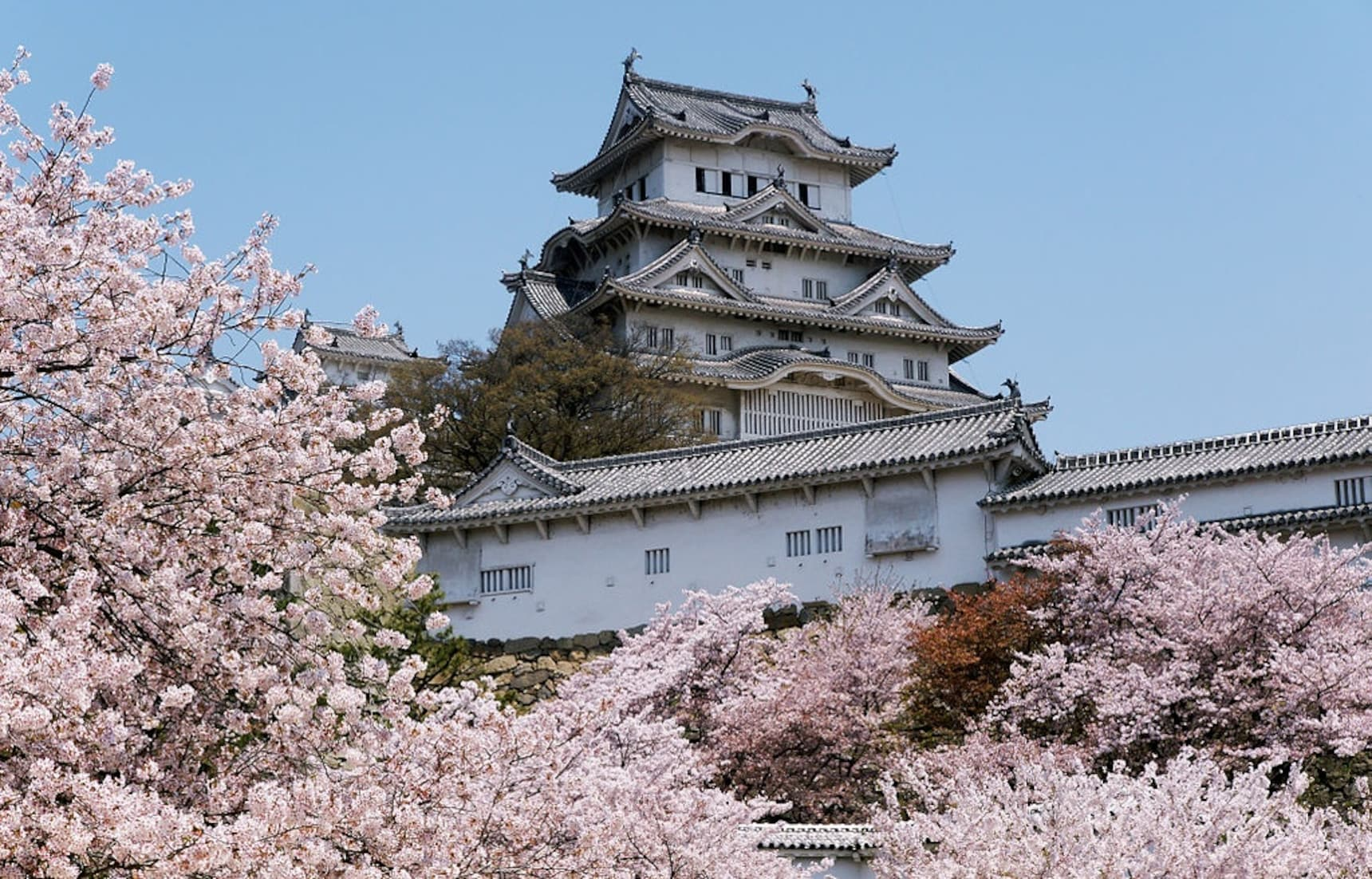 Top 5 Cherry Blossom Viewing Spots in Hyogo