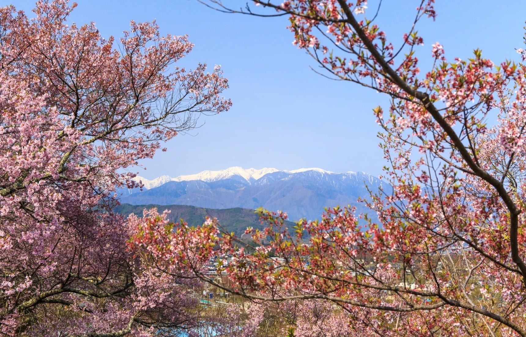 Japan's Top 5 'Hanami' Hikes