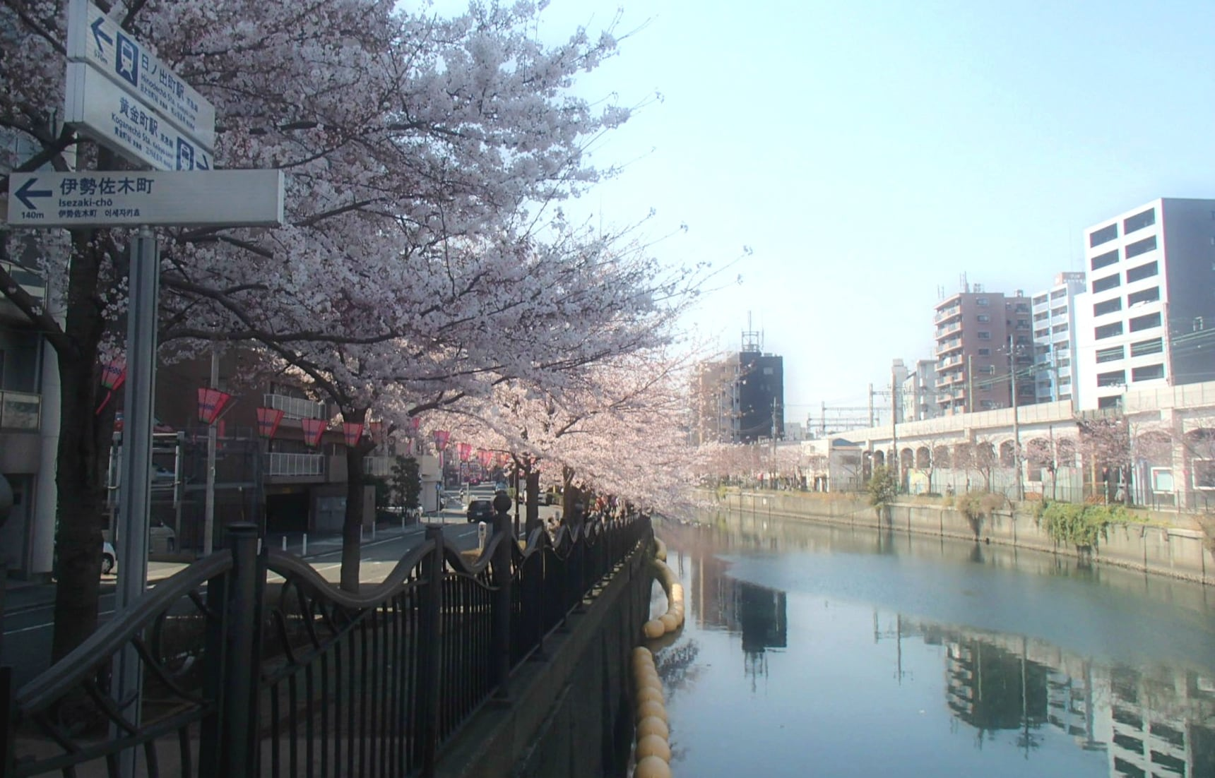 Secret Sakura Spots in Residential Areas