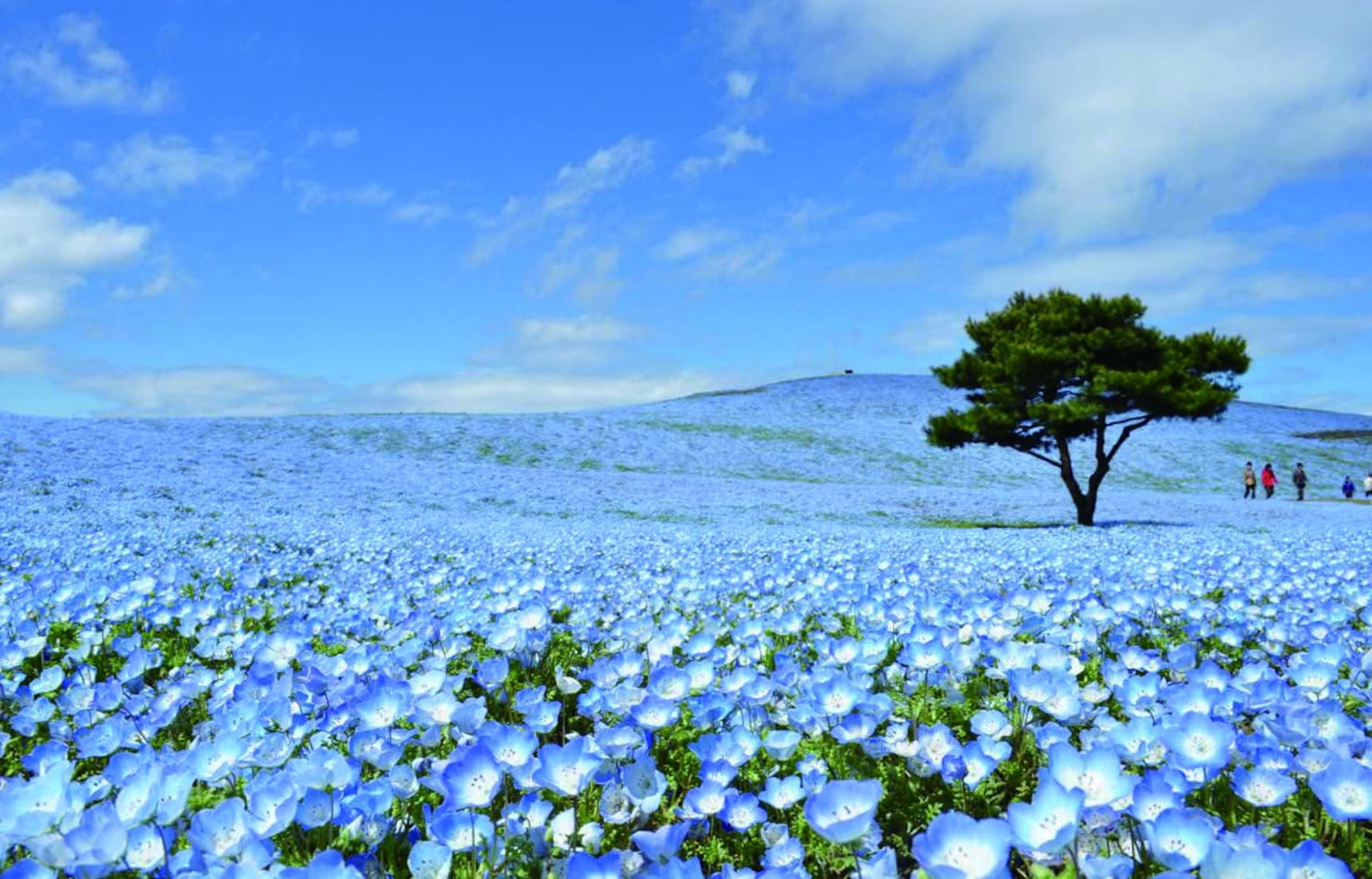 12 Things to Do in Ibaraki in Spring