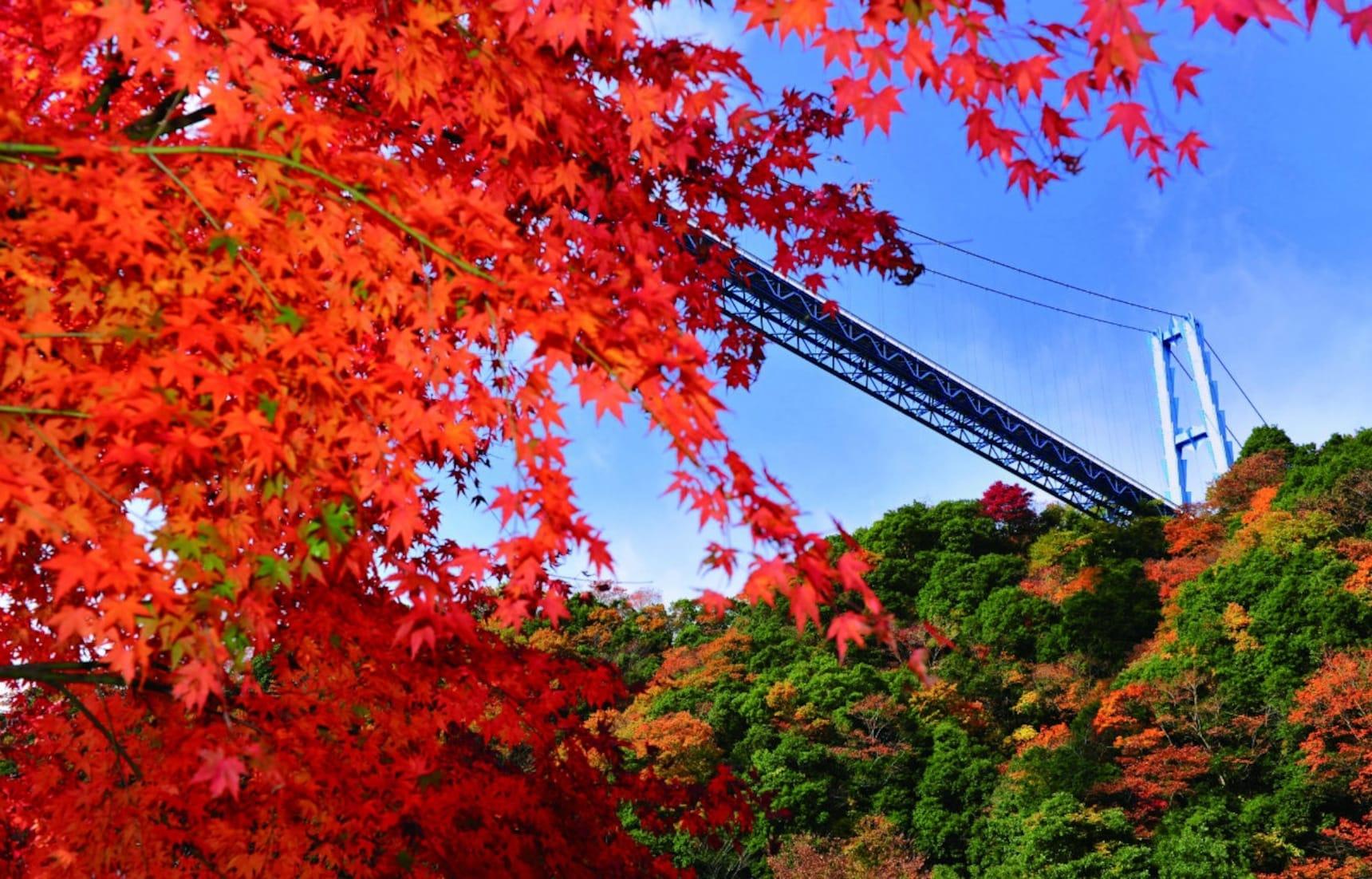 12 Things to Do in Ibaraki in Autumn