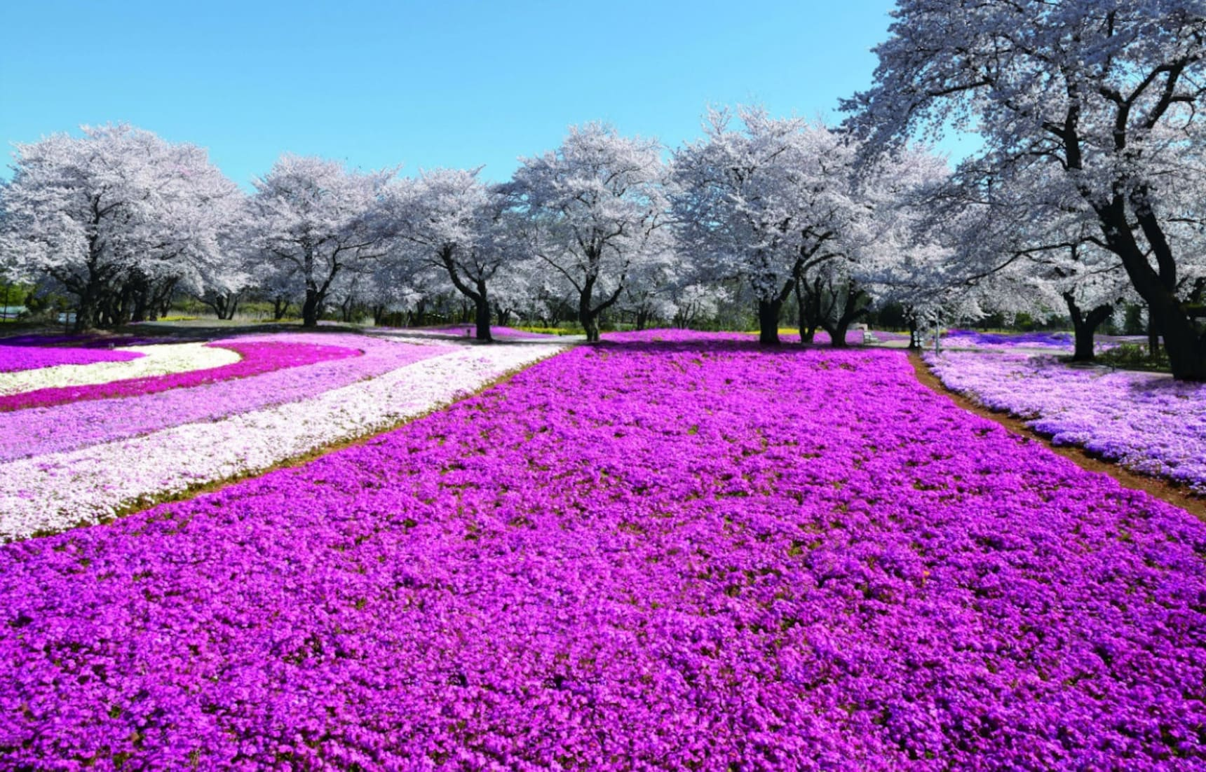 12 Things to Do in Gunma in Spring
