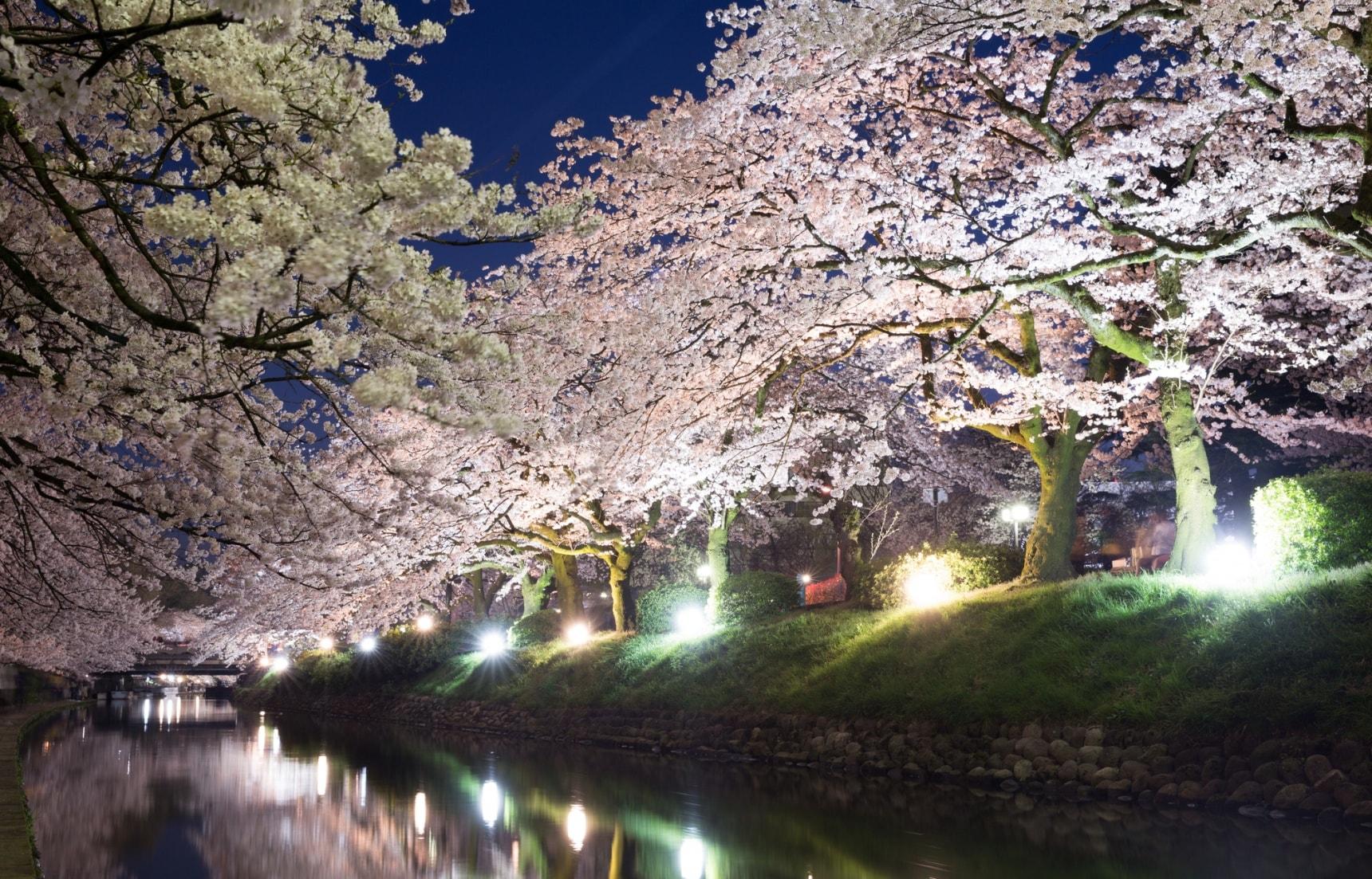 5 Must-See Cherry Blossom Sites in Hokuriku