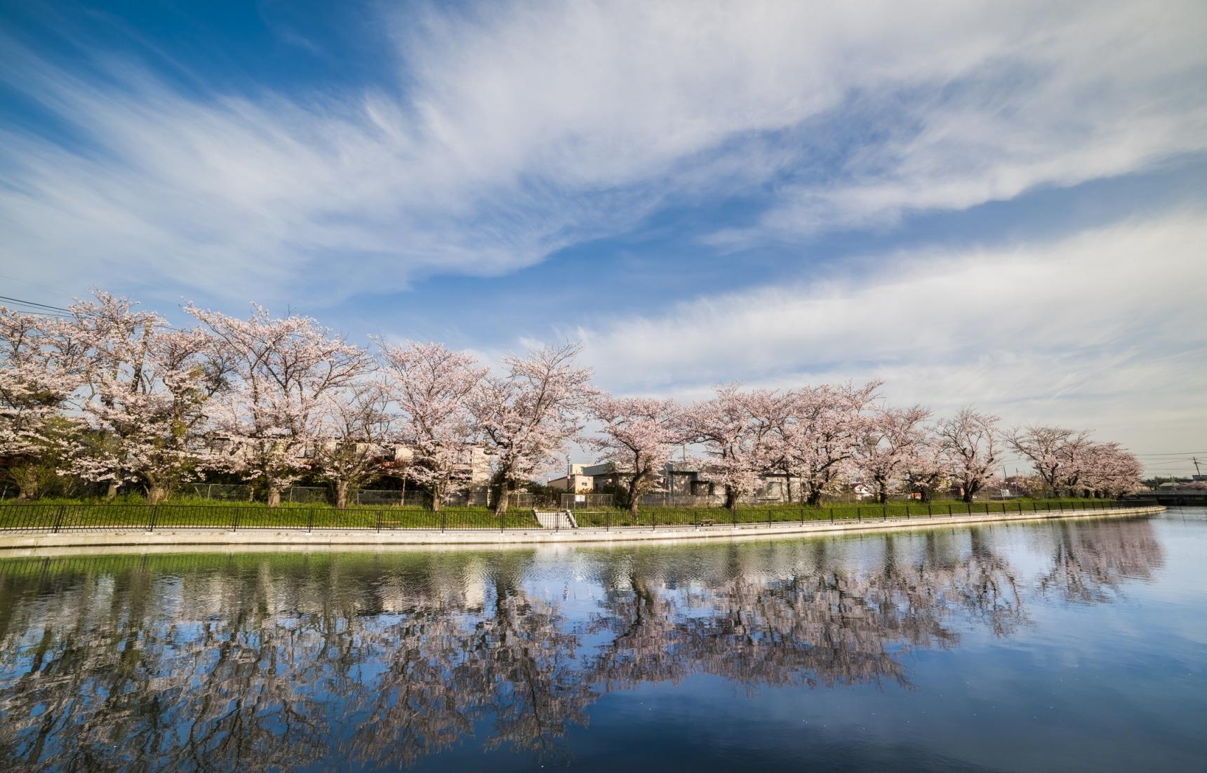 4 Spots for Sakura Along the Water in Tokyo