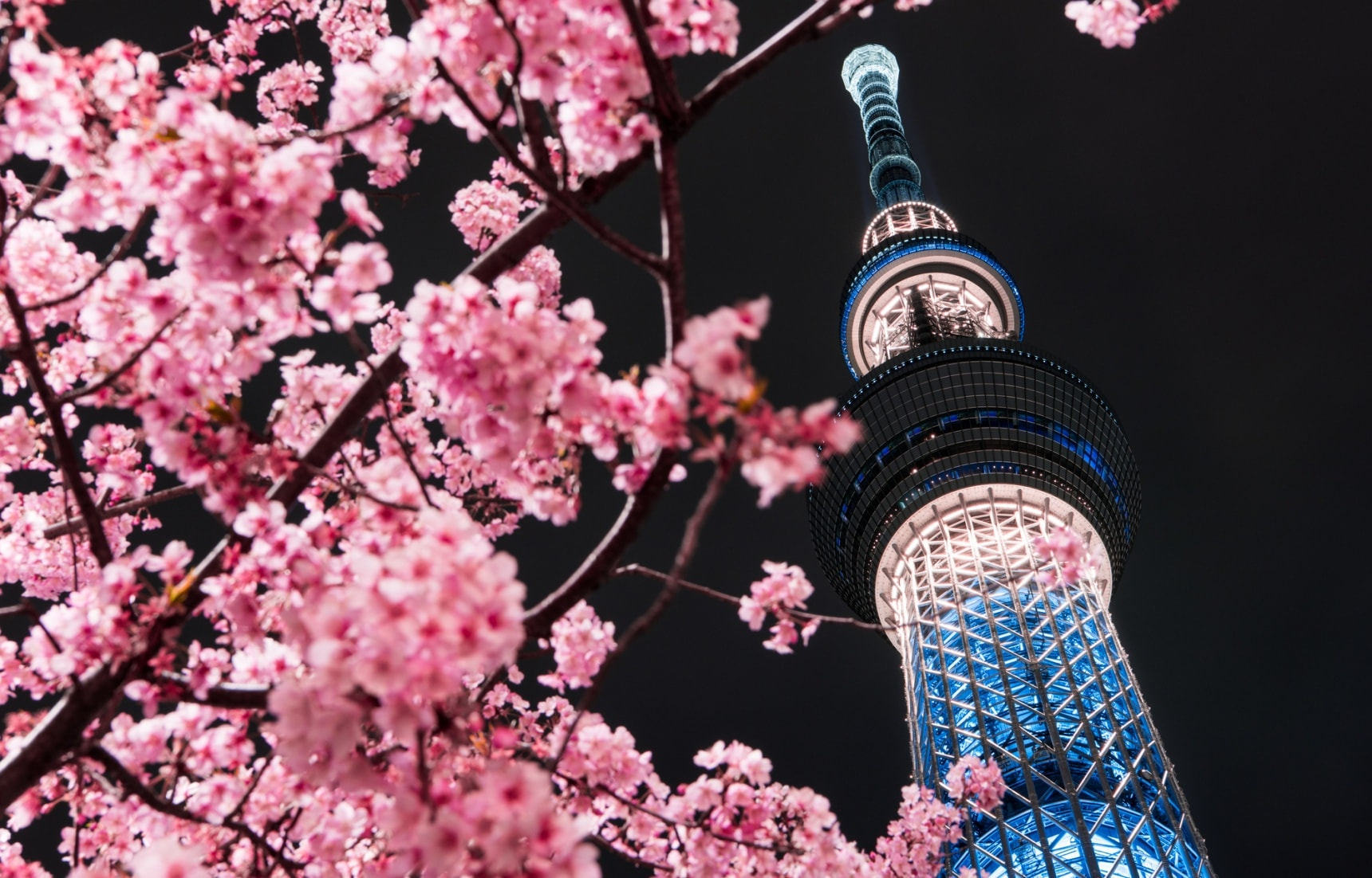 Sumida: Where Japan's Past & Future Collide