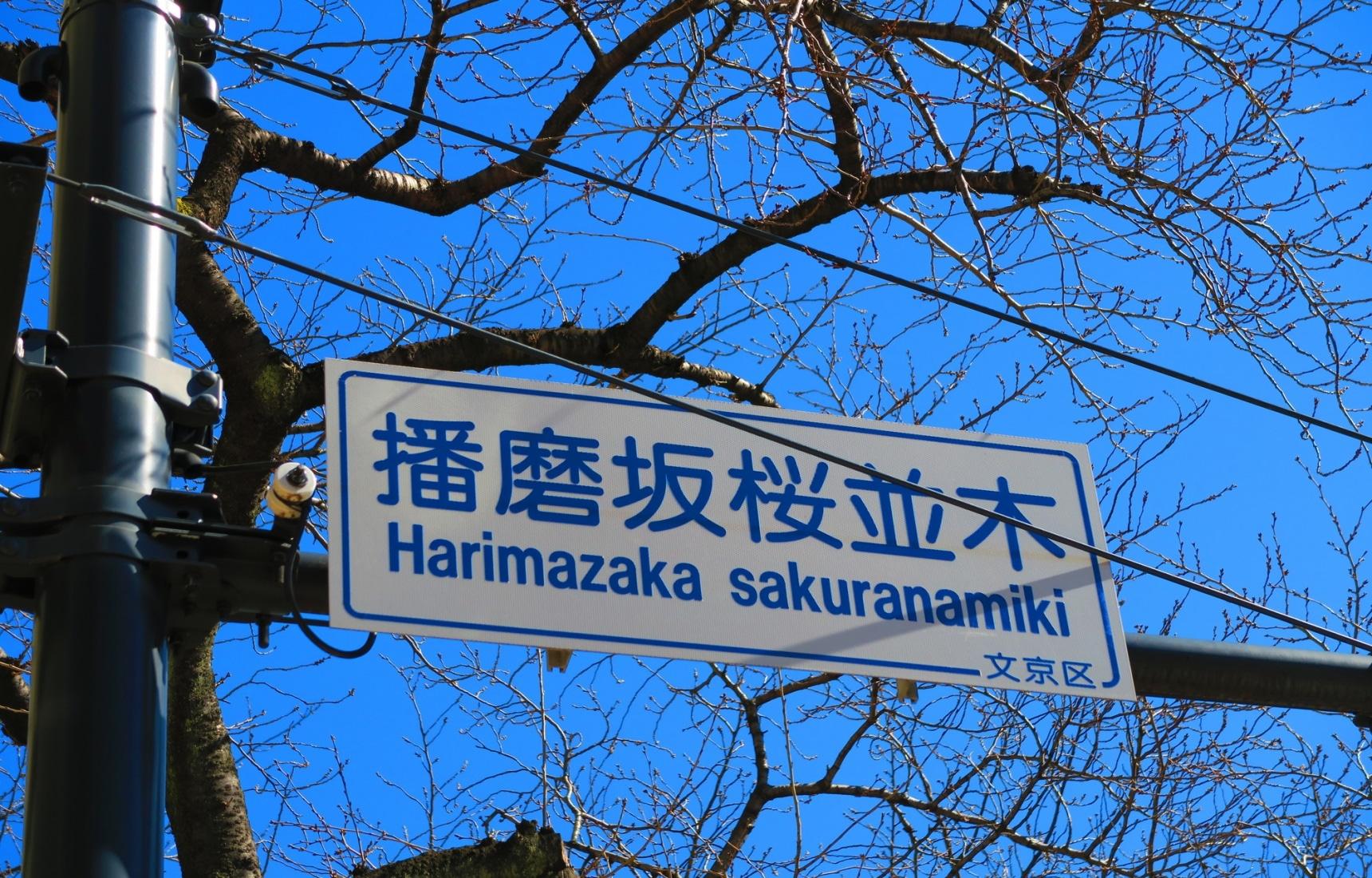 Harima Zaka: Tokyo Sakura without the Crowds!