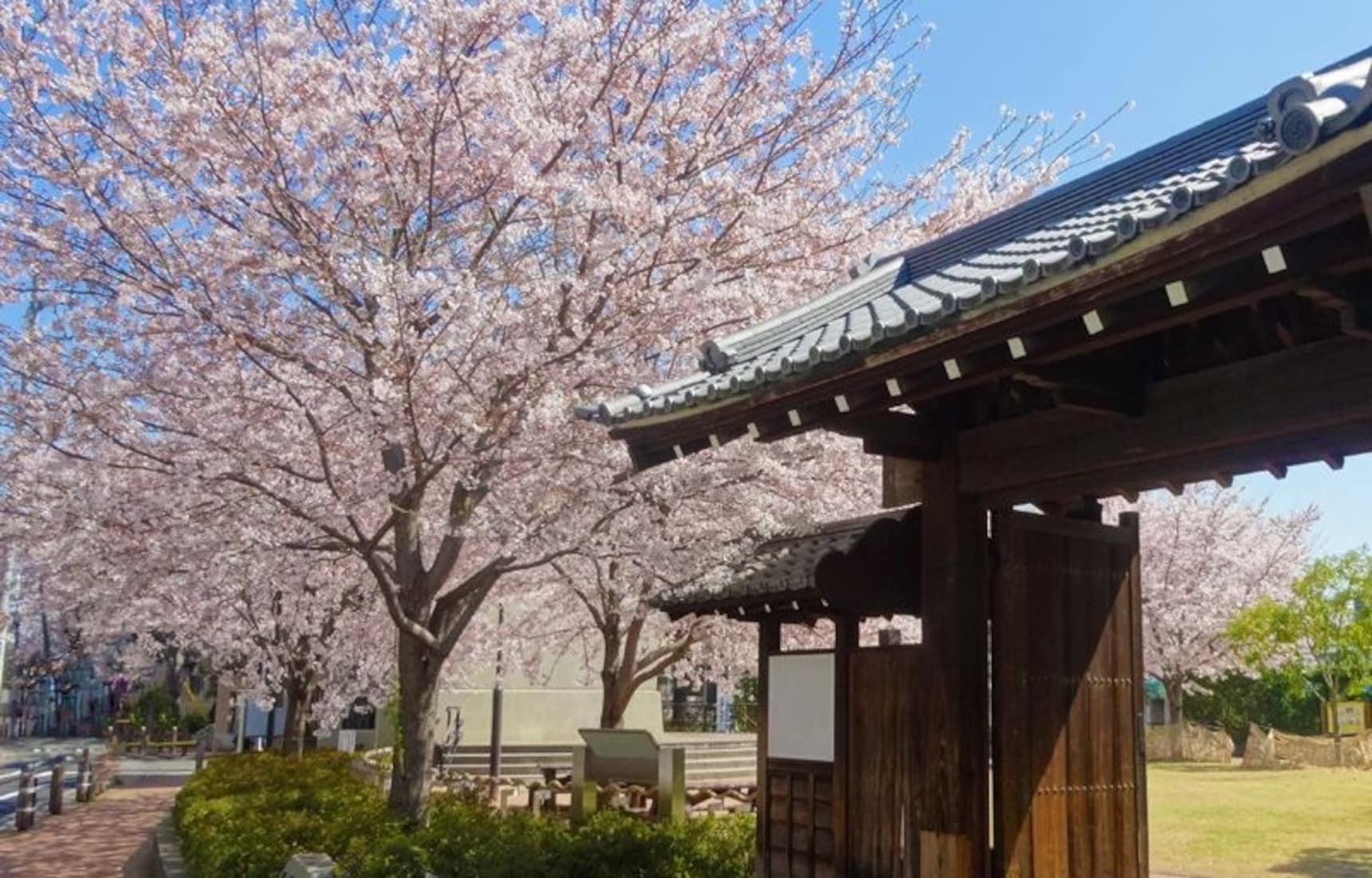 8 Must-See Sakura Avenues in Tokyo