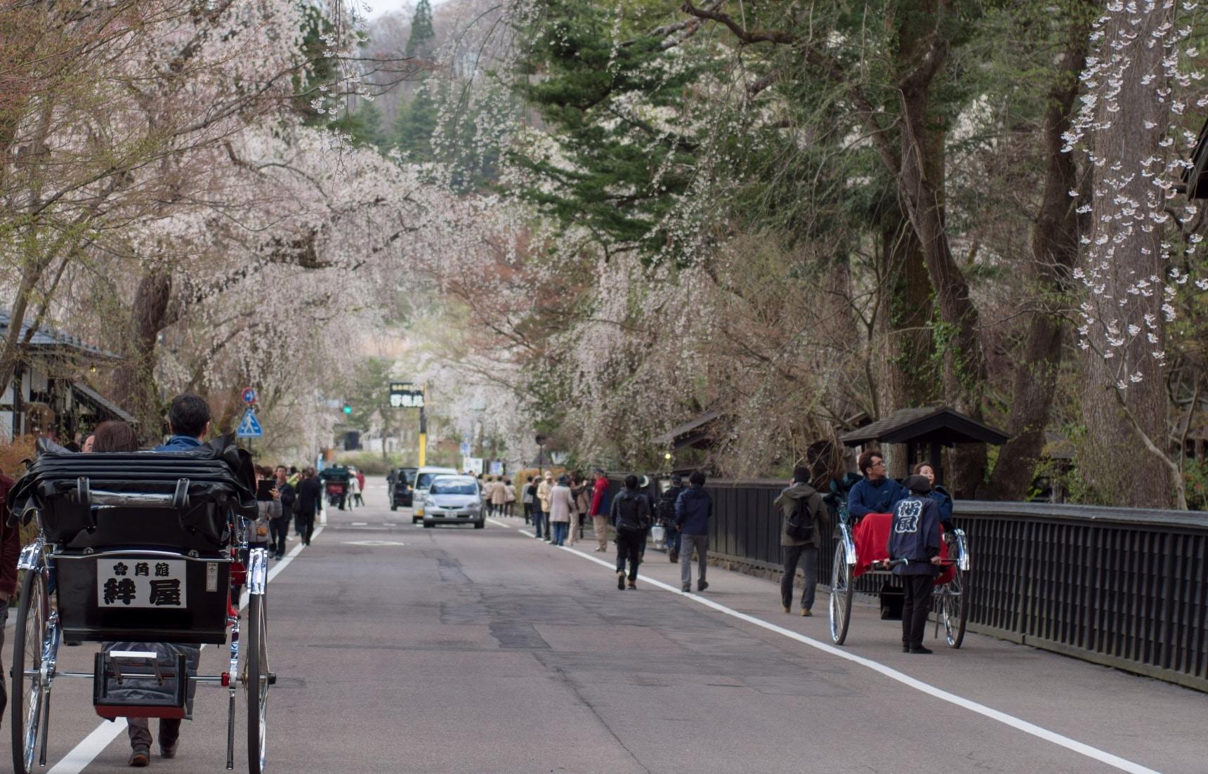 Kakunodate หมู่บ้านซามูไรและซากุระที่สวยที่สุด