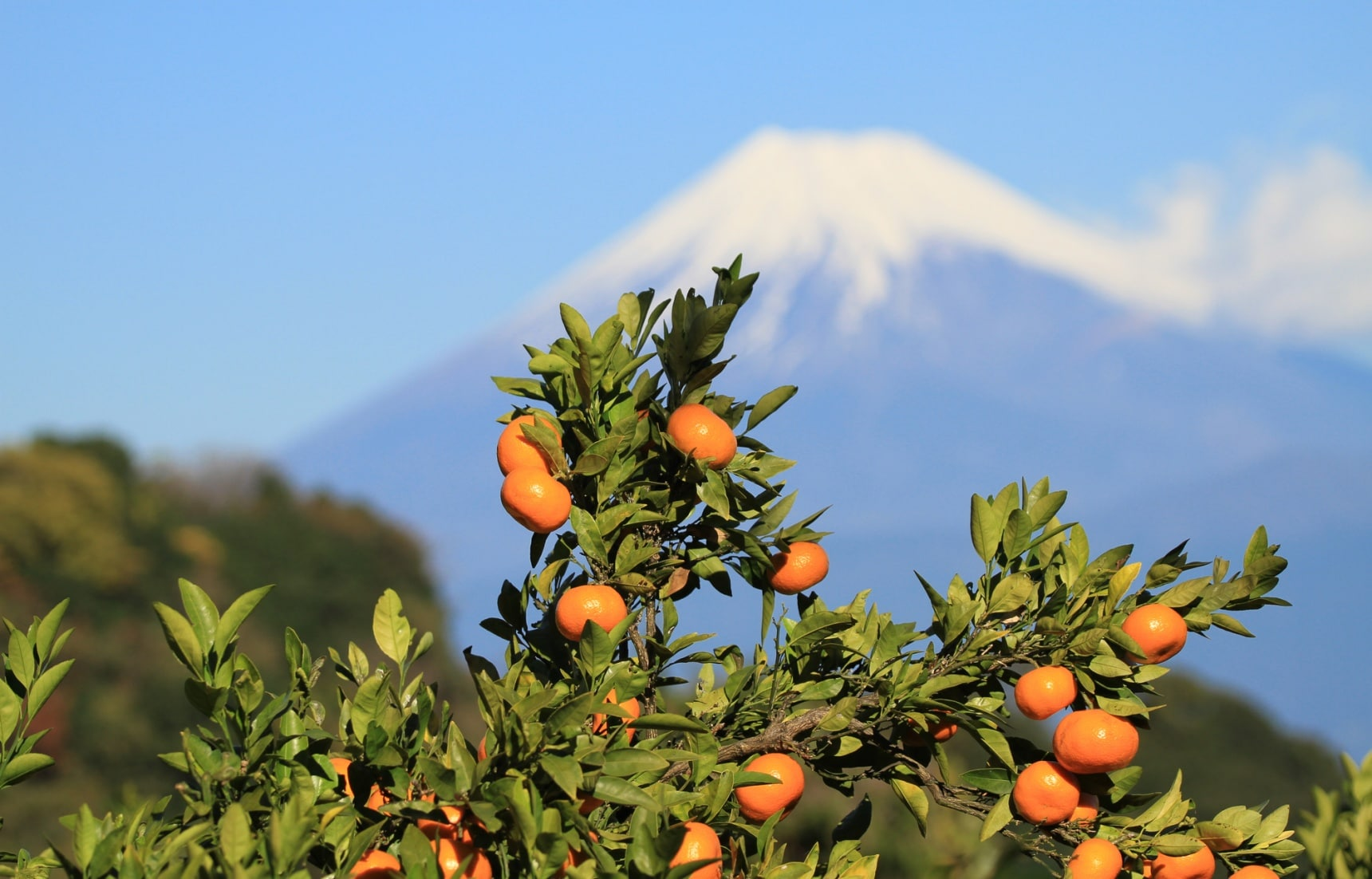 Top Ranked Fruits in Japan for Each Season