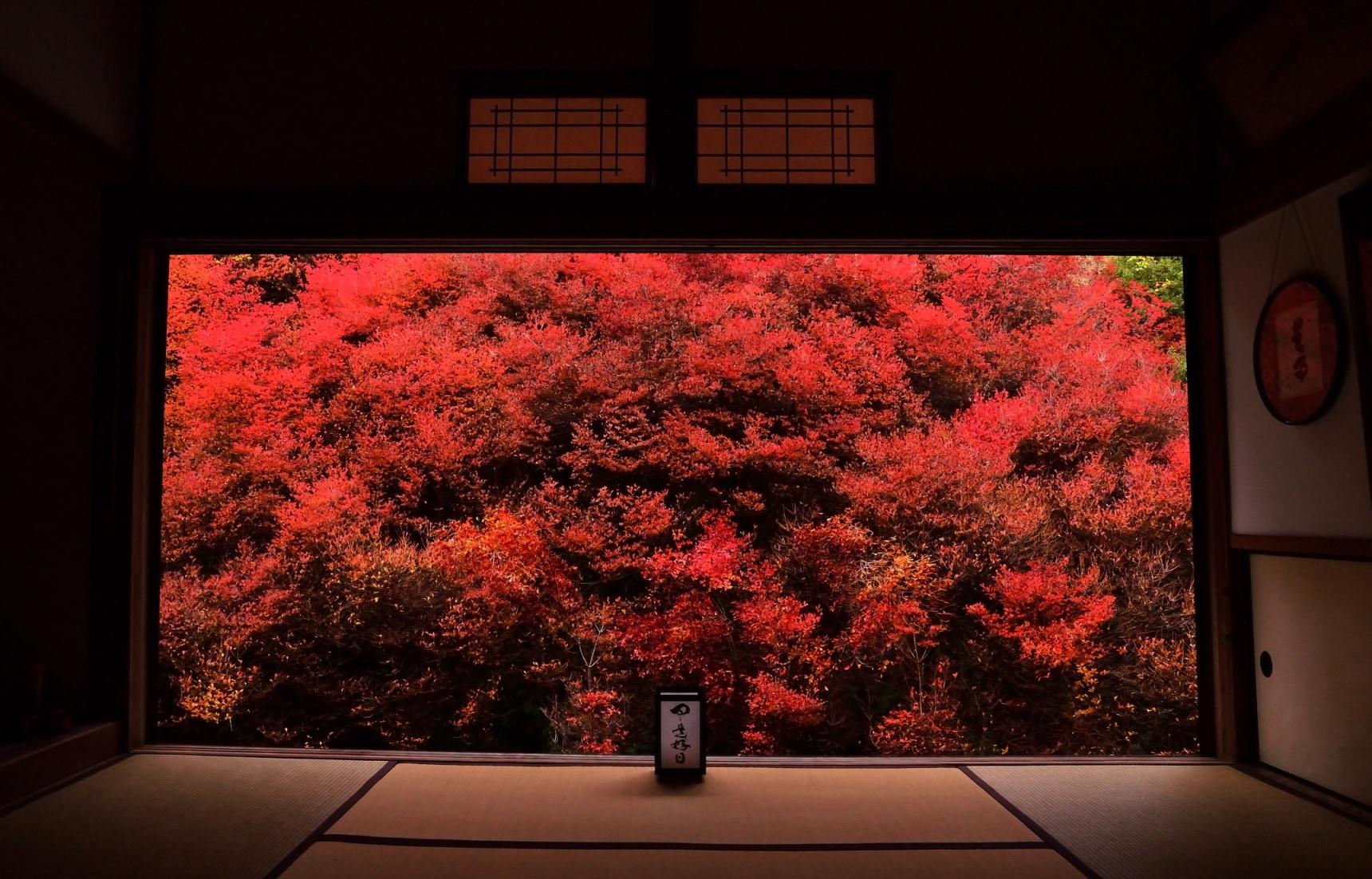 ชมใบไม้แดงในญี่ปุ่น มาช่วงไหนดี?