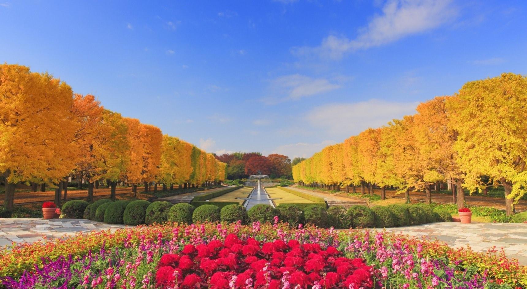 從南到北玩透透!12大日本紅葉與銀杏黃葉浪漫競演景點推薦