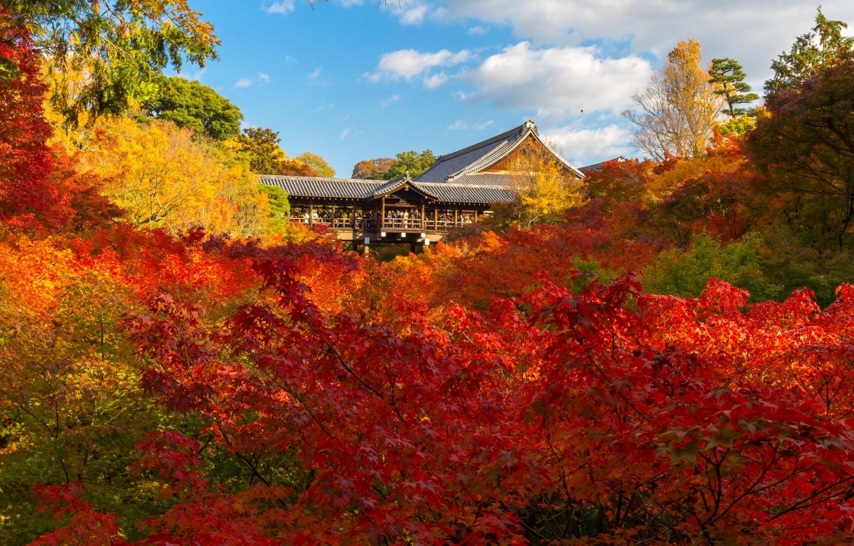 ชมใบไม้เปลี่ยนสีใน 5 วัดดังของเกียวโต