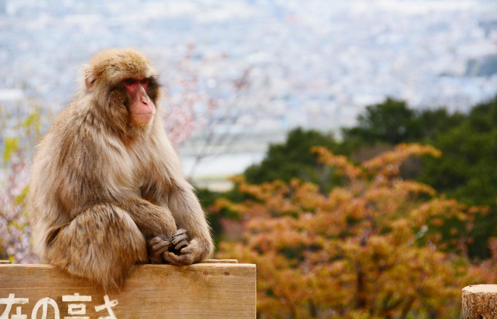 【京都自由行】除了清水寺還能去哪?京都私房景點大公開!