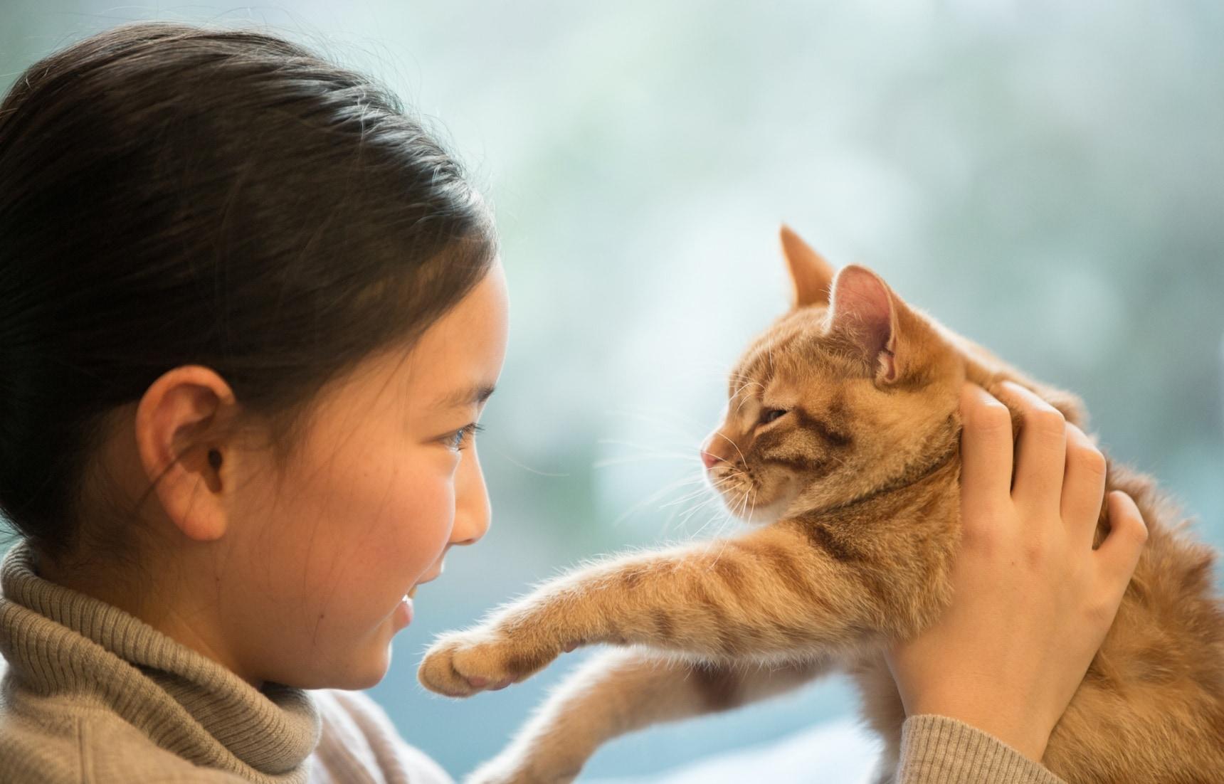 คาเฟ่แมวในญี่ปุ่น ทาสแมวต้องรู้จักไว้