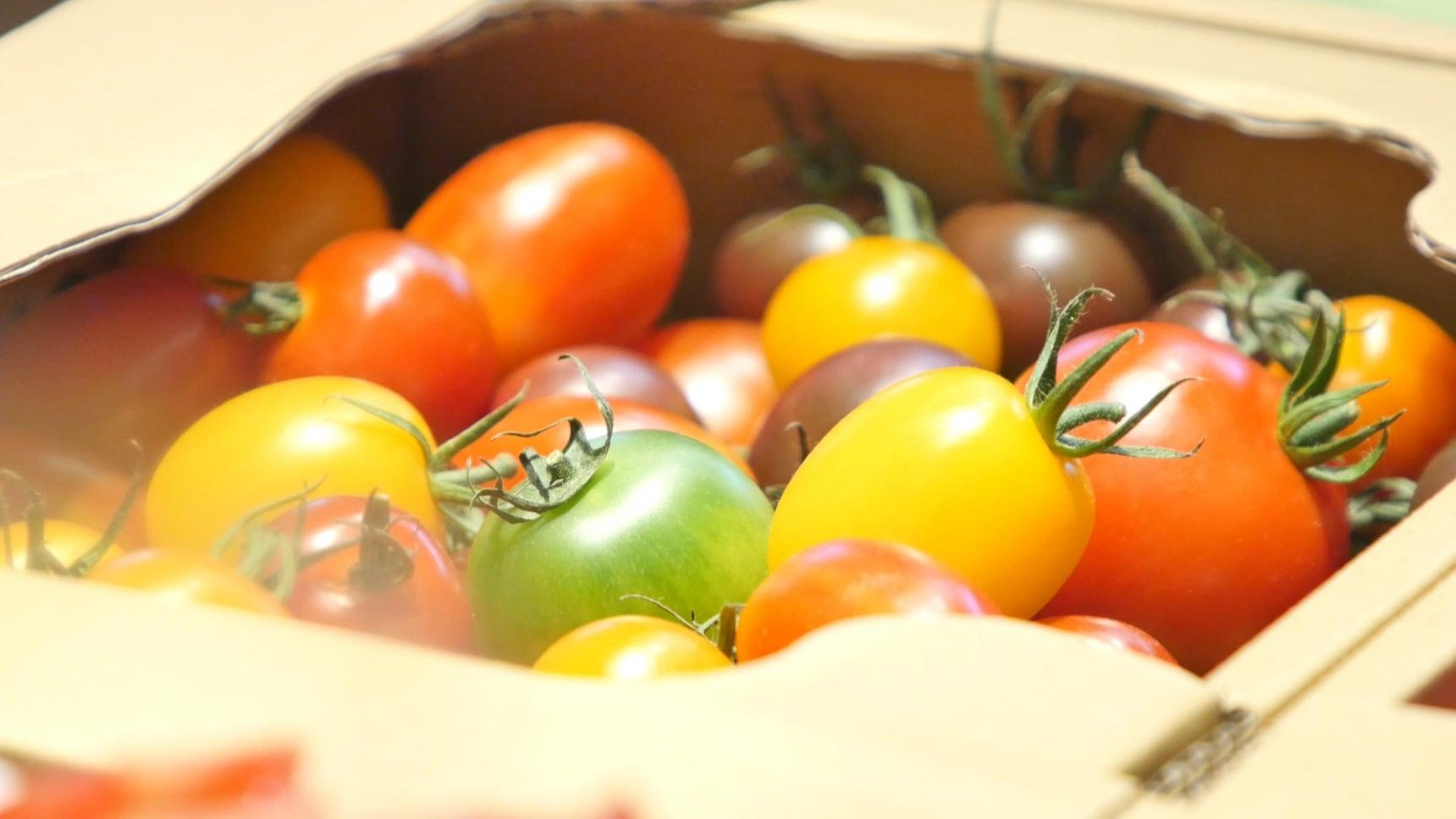 เที่ยวชิมผลไม้และขุดฟอสซิลในฟุคุชิมะ!
