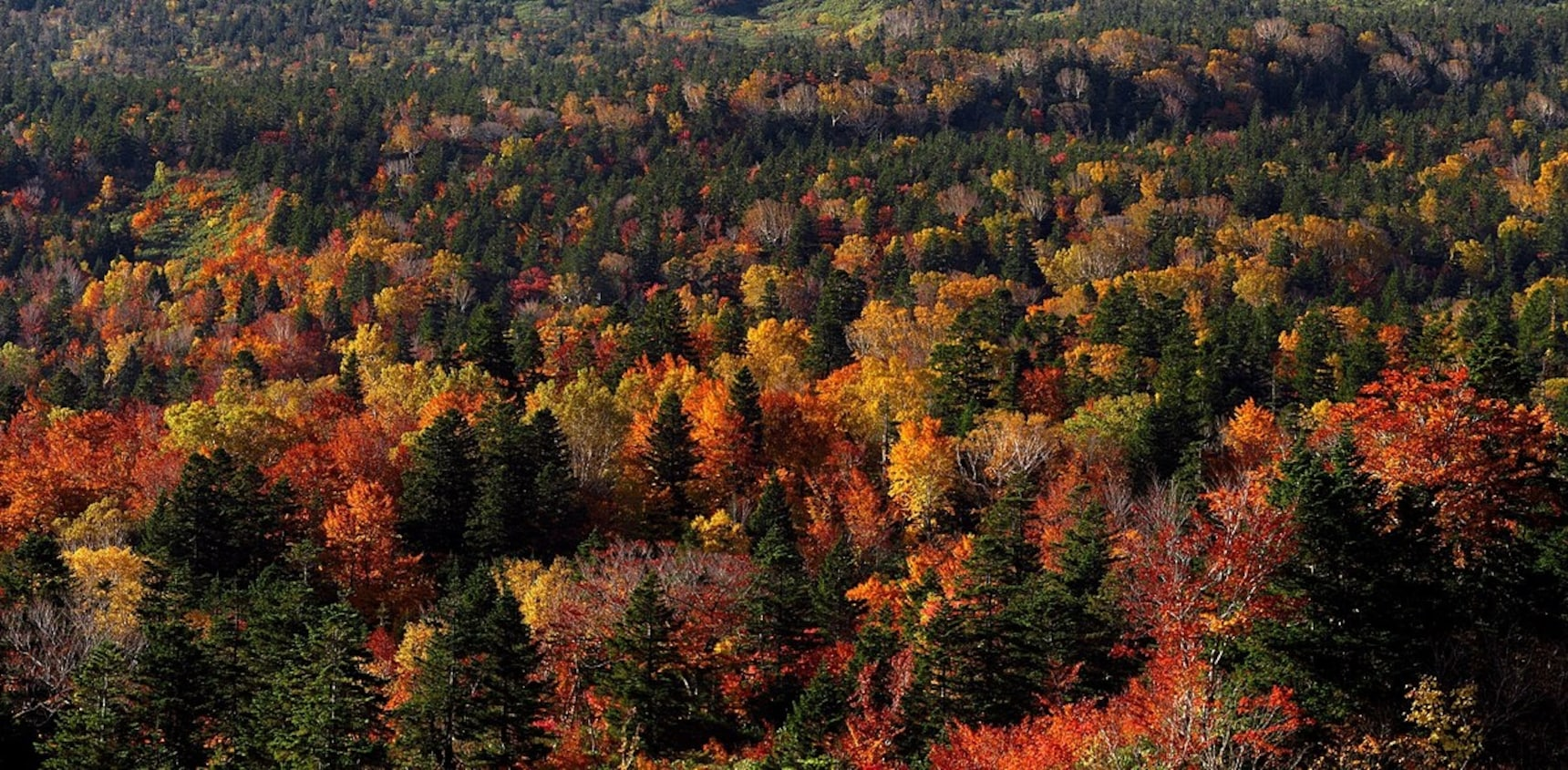 2017 Autumn Foliage Forecast
