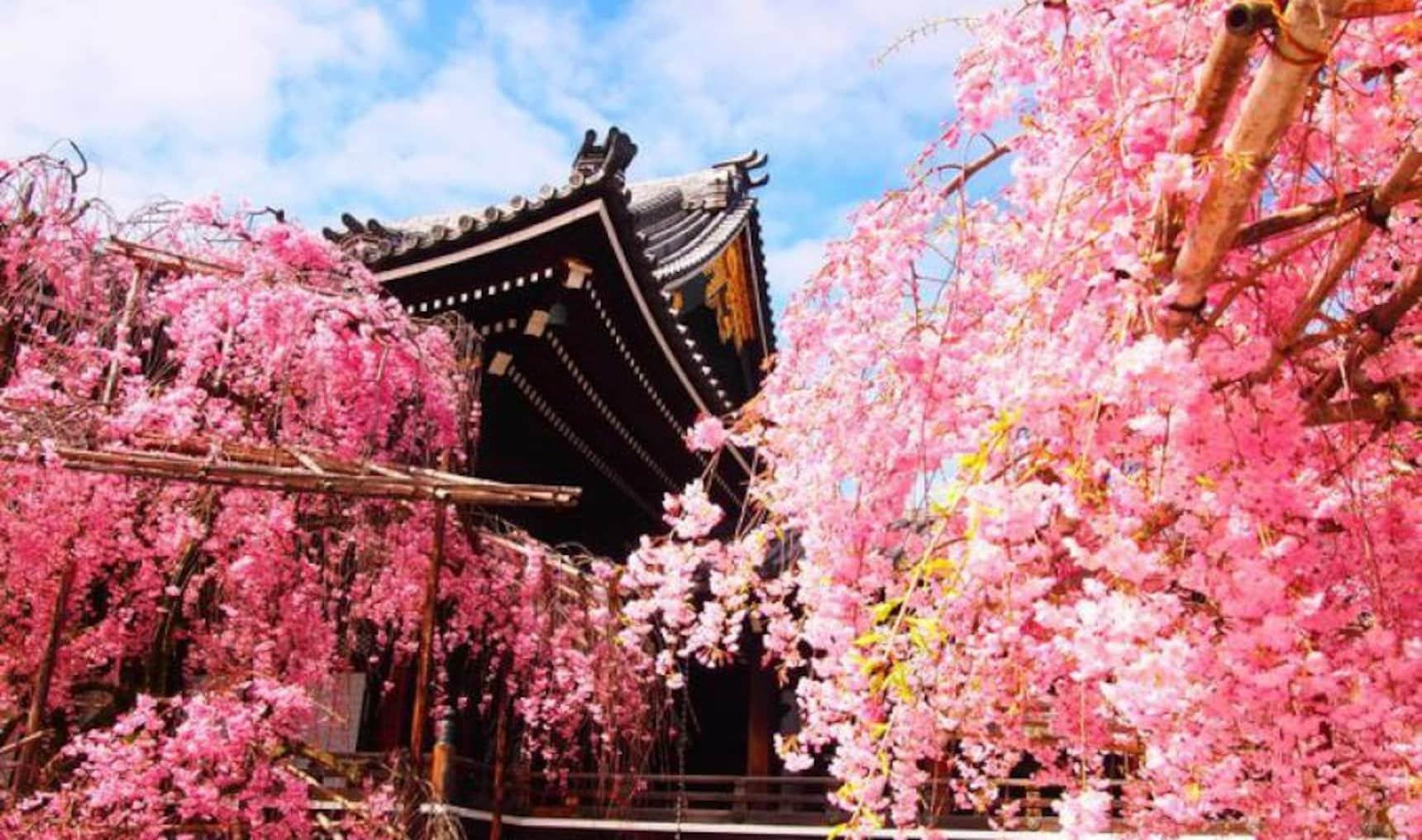 10 Unique Cafés in Kyoto