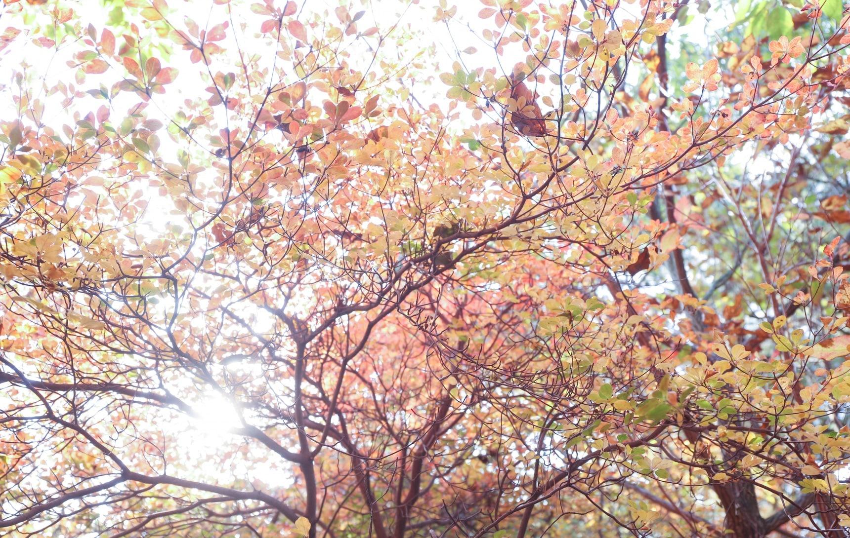 紅葉斜落九州北部時