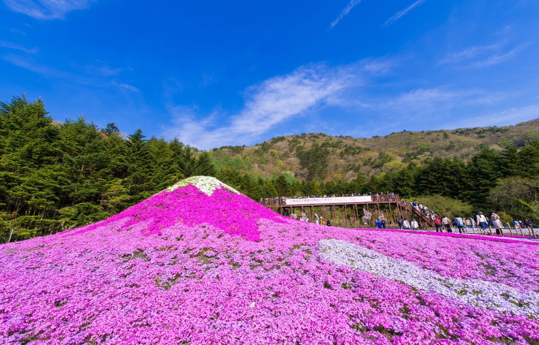 春天賞櫻跟我走!2019不容錯過的日本關東芝櫻祭典