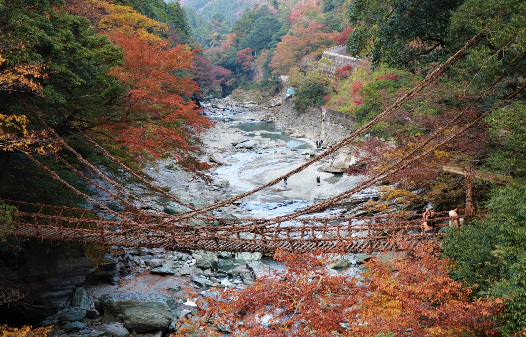 Take a Walk on the Wild Side in Tokushima