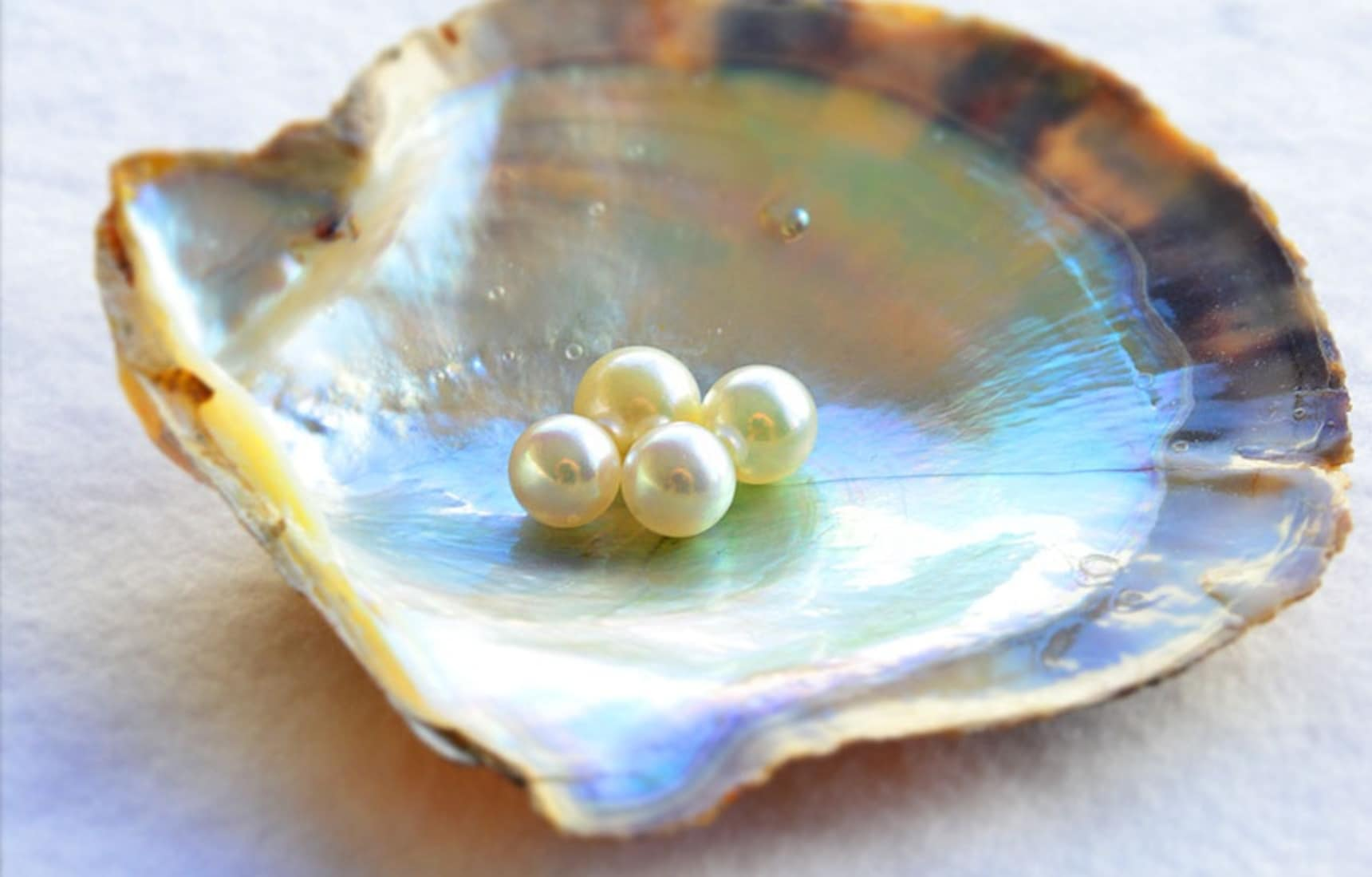 The Secrets of Pearl Harvesting in Japan