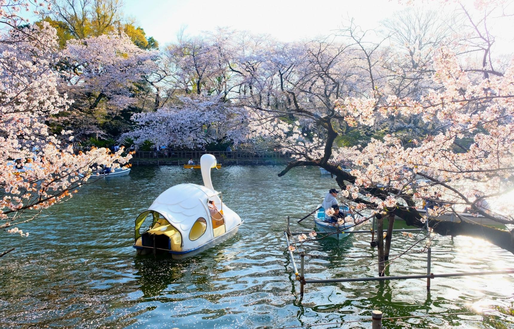 """อิอ้นพาทัวร์ ดูซากุระที่สวน """"อิโนะคาชิระ"""""""