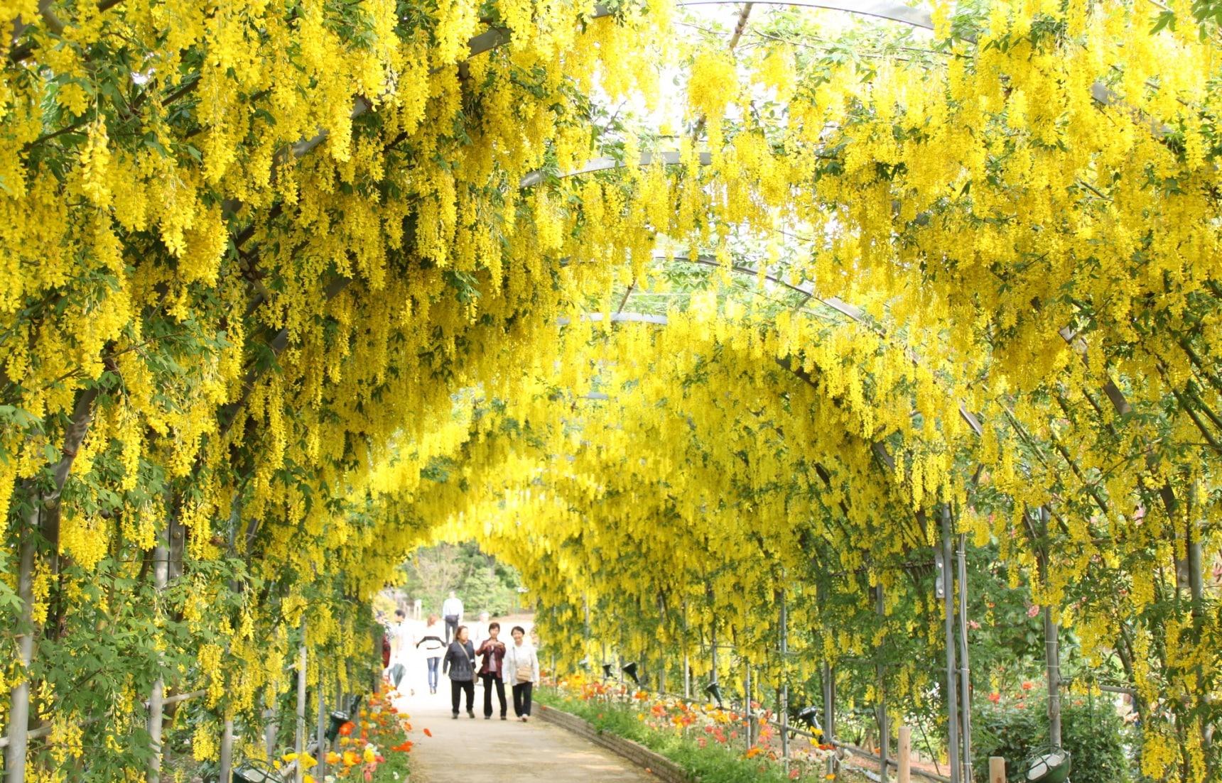 【日本自由行】錯過櫻花季覺得扼腕嗎?日本黃金週必訪賞花景點全公開,準備打卡曬美照!