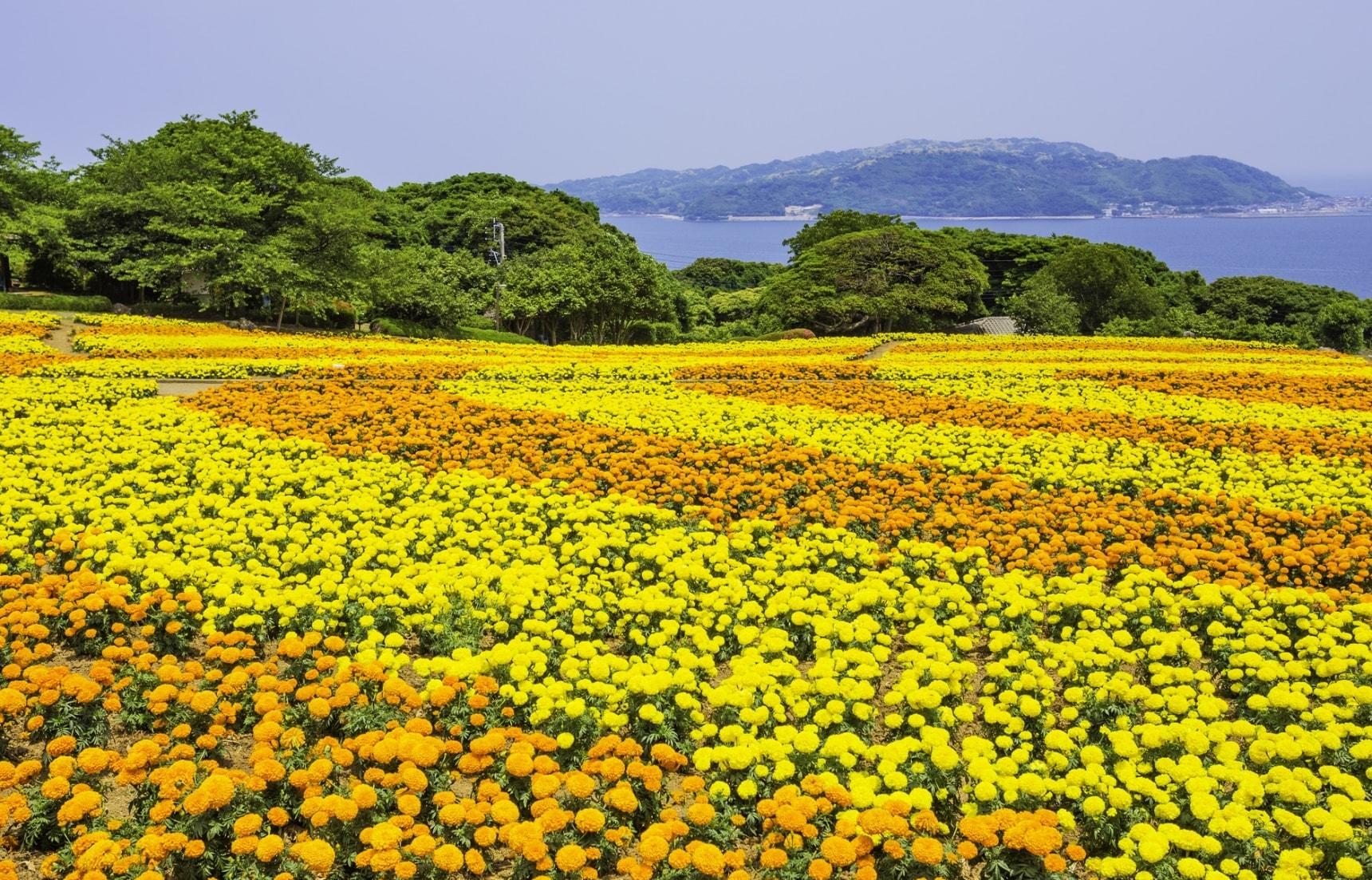 พักตาพักใจที่เกาะดอกไม้ โนโกะโนะชิมะ