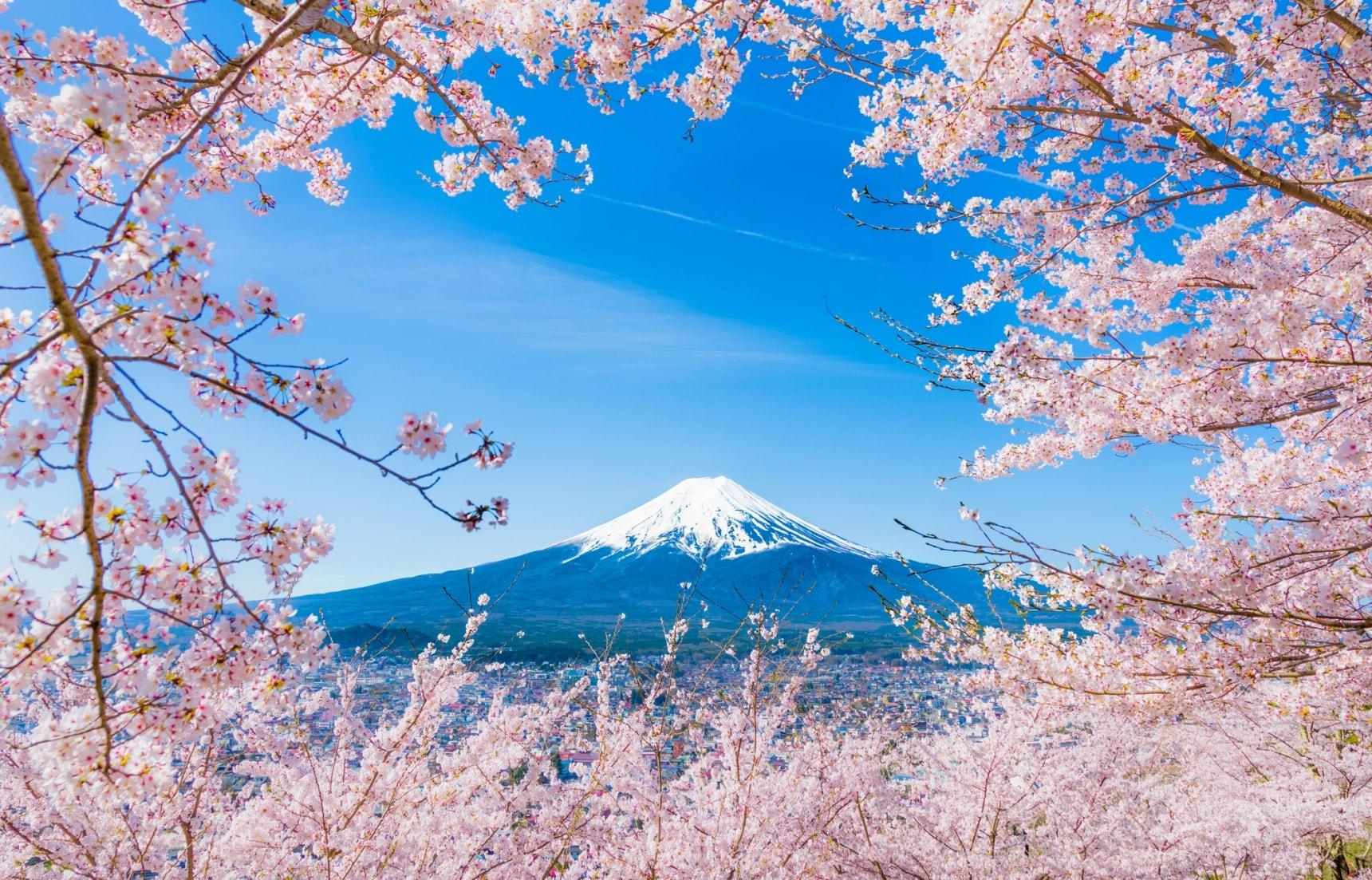 รวมข้อมูลซากุระทั้ง 12 สายพันธ์ของญี่ปุ่น