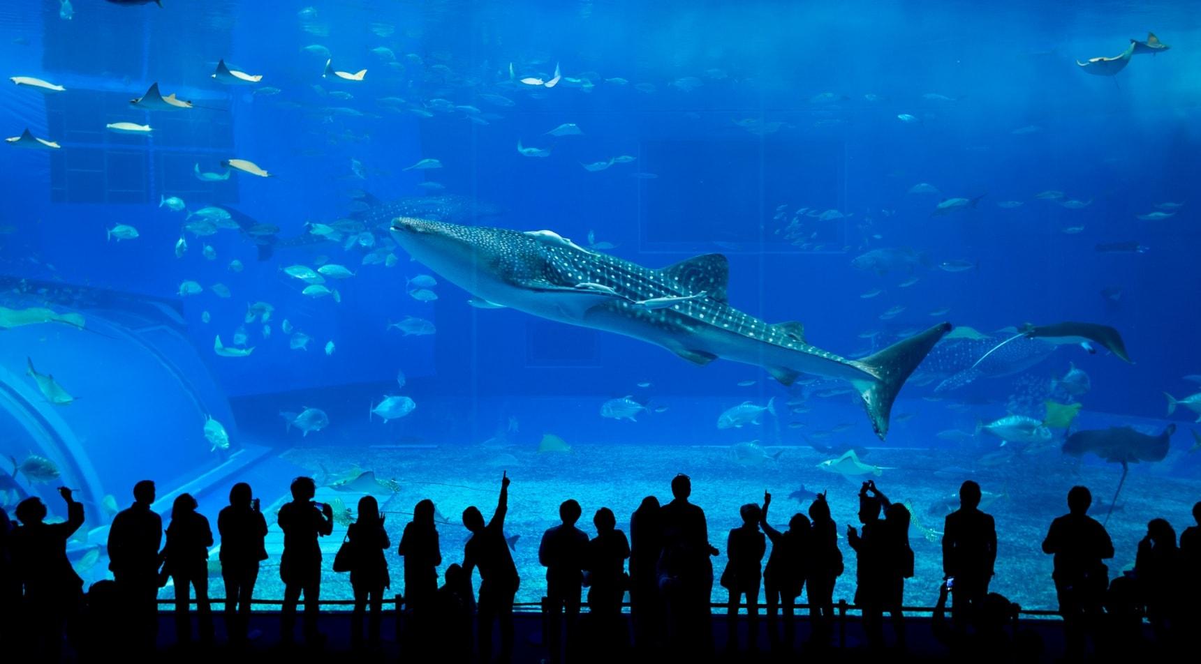 รวมอควาเรียมและพิพิธภัณท์สัตว์น้ำในญี่ปุ่น